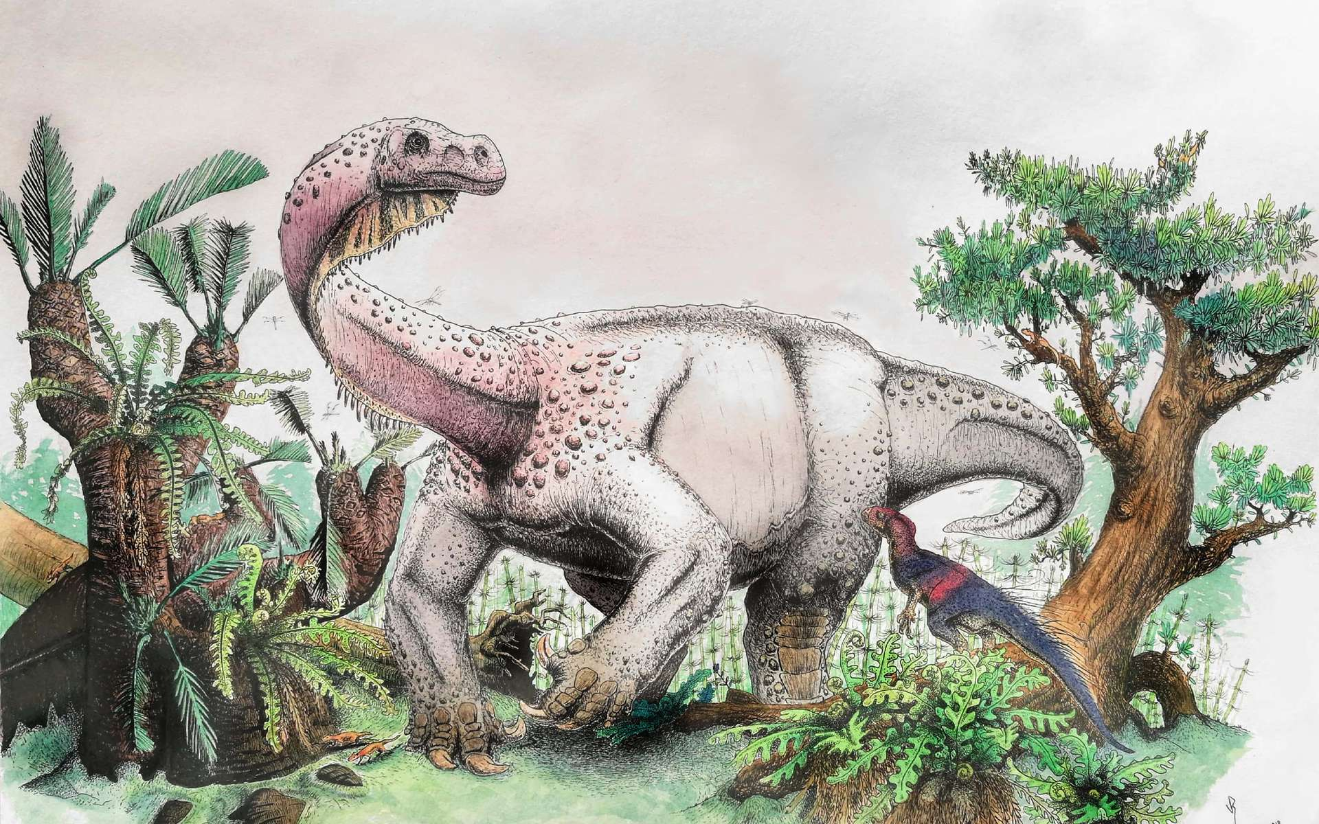 Le nouveau dinosaure découvert, Ledumahadi mafube, et son aspect probable reconstitué par un paléontologue paléoartiste. © Viktor Radermacher, University of the Witwatersrand