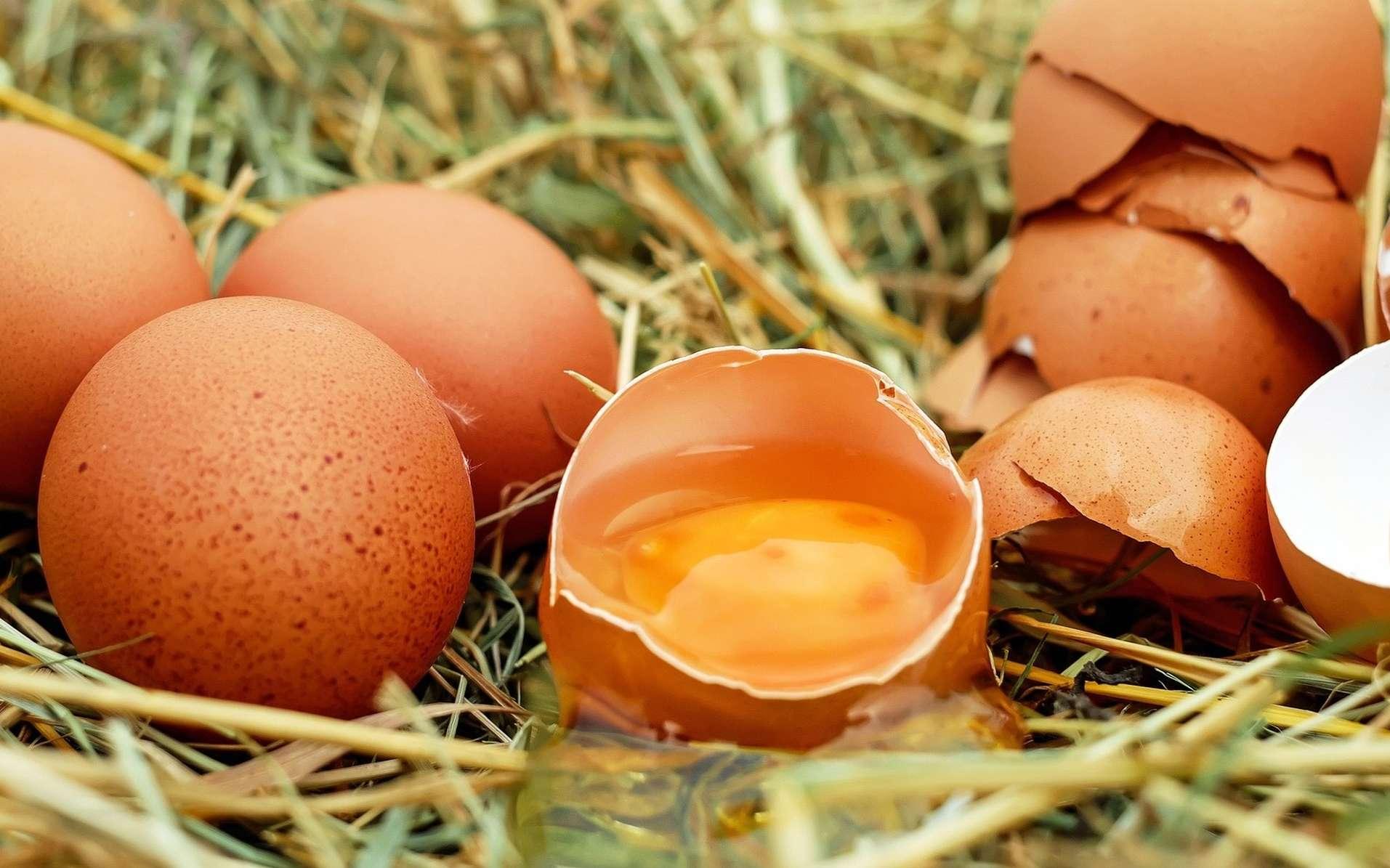 Les ovo-végétariens consomment des œufs. © Couleur, Pixabay, DP