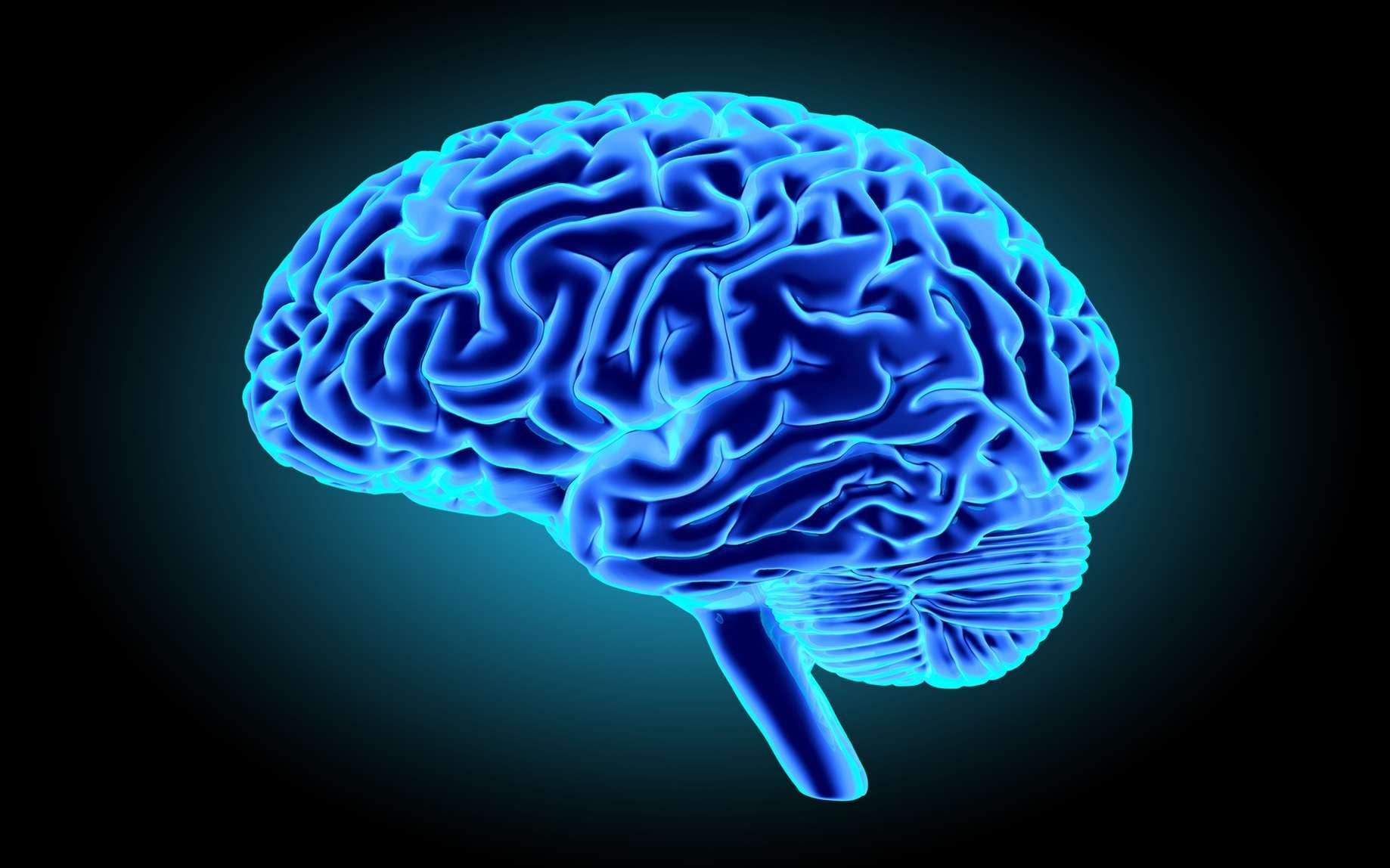 Le cerveau humain n'est ni infiniment grand, ni infiniment petit. Il est infiniment complexe. © gorbovoi81, Fotolia