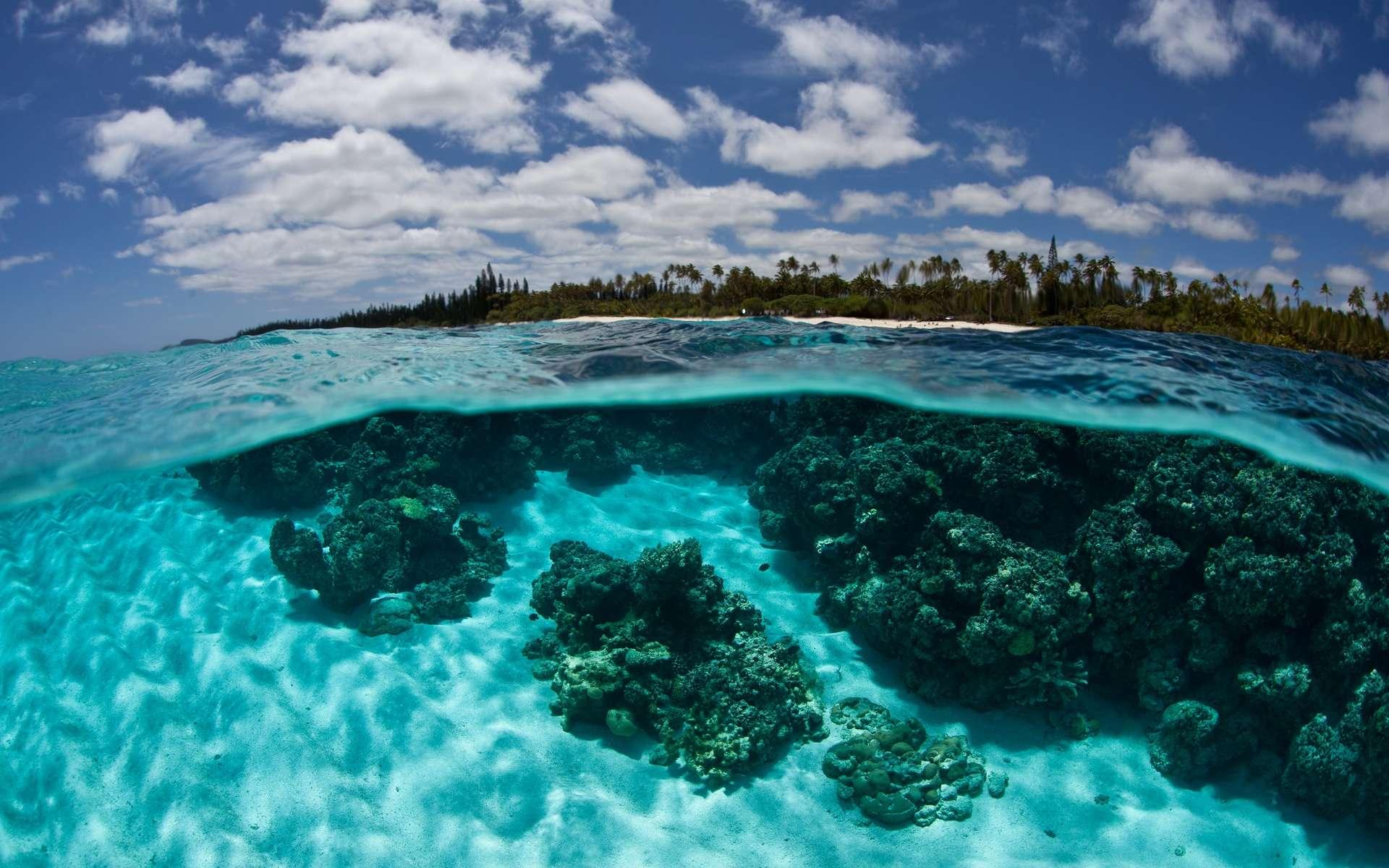 L'état de la biodiversité dans les récifs proches de l'Homme est préoccupant. © Ethan Daniels, Shutterstock