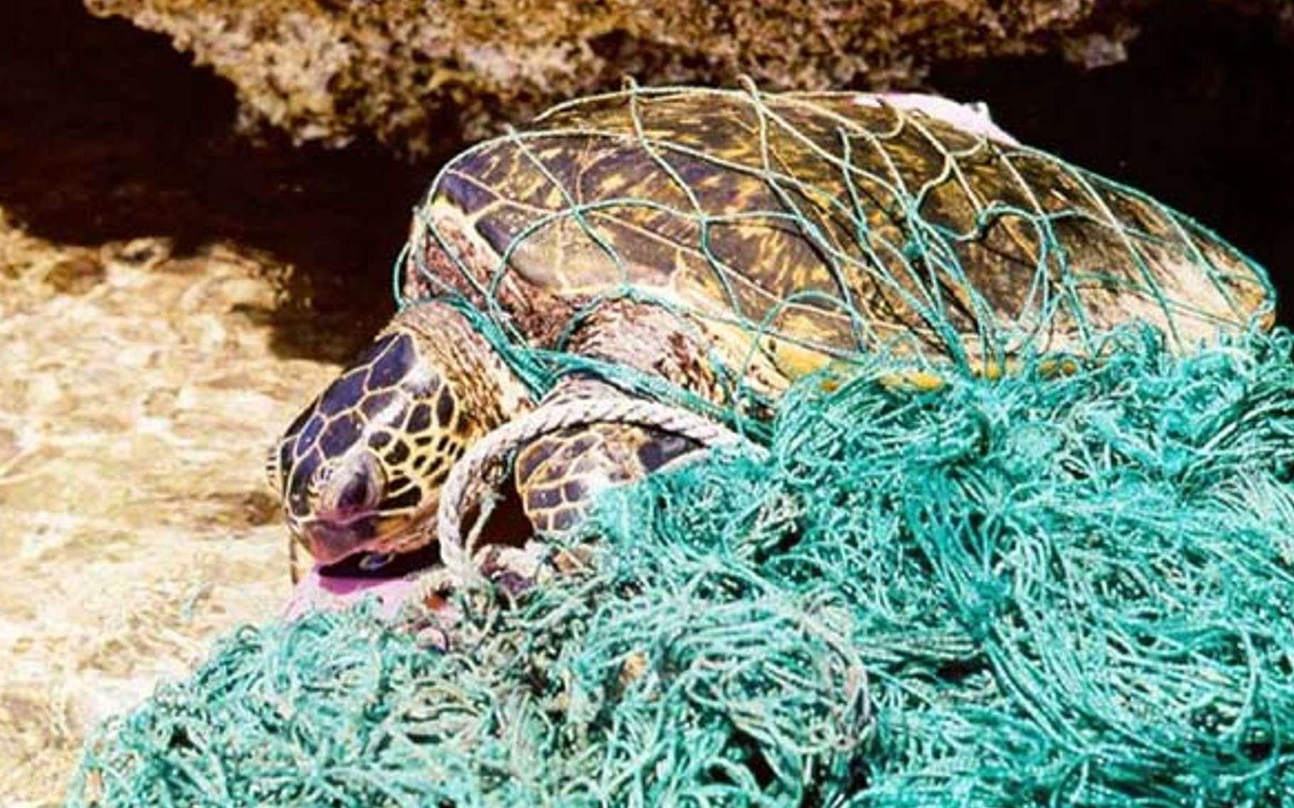Exemple de déchets présents dans les mers : un filet fantôme. Perdu ou jeté par des pêcheurs, il continue d'emprisonner des animaux marins. © Wikimedia Commons, DP