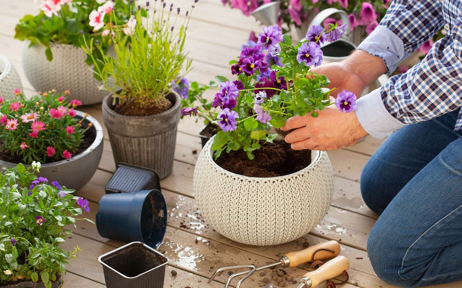 Réussir la plantation d'une potée en quelques gestes ! © Dusk, Adobe Stock