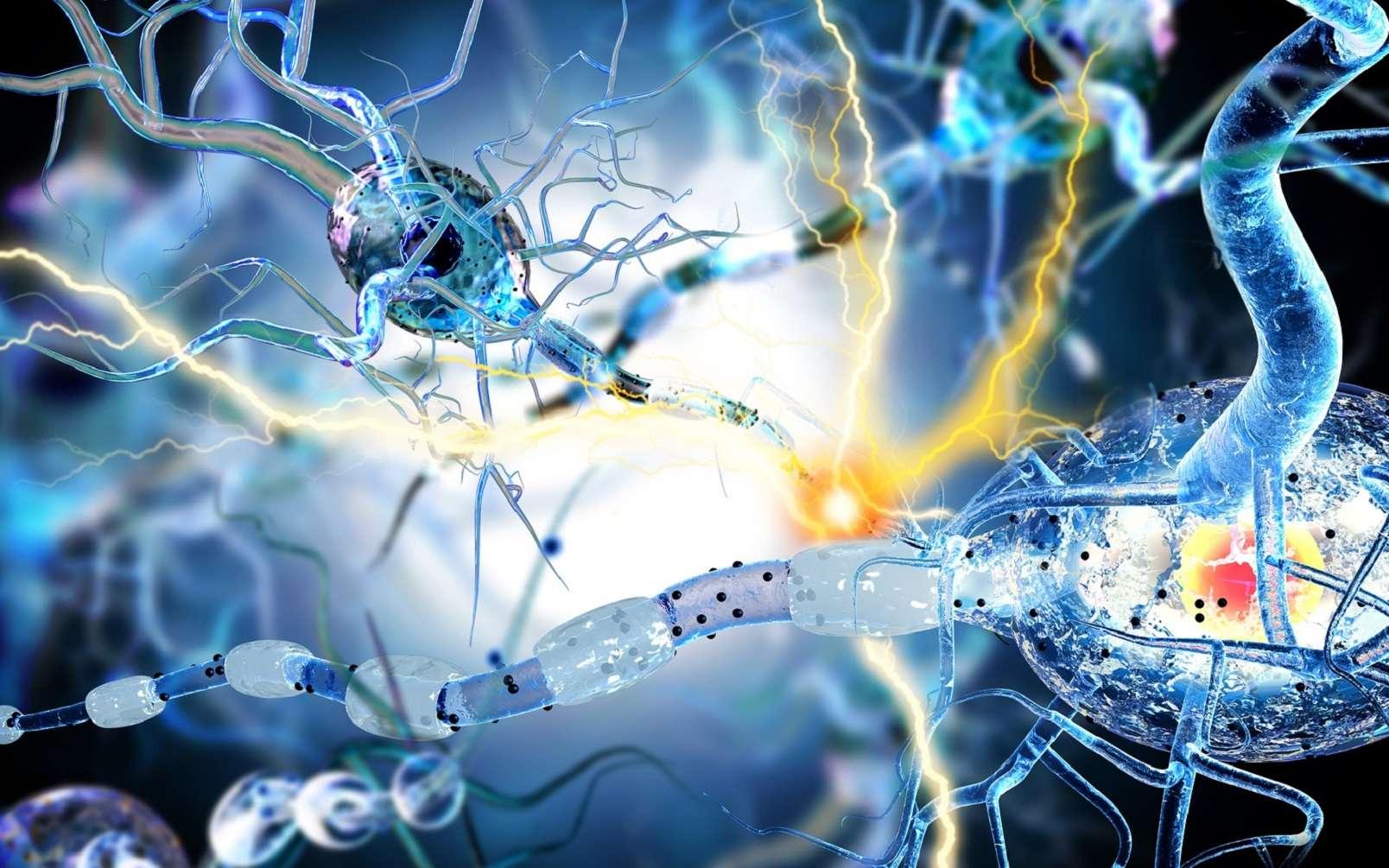 La SEP est une maladie où le système immunitaire s'attaque à la gaine de myéline des neurones ce qui gêne la transmission des messages nerveux. © ralwel, Fotolia