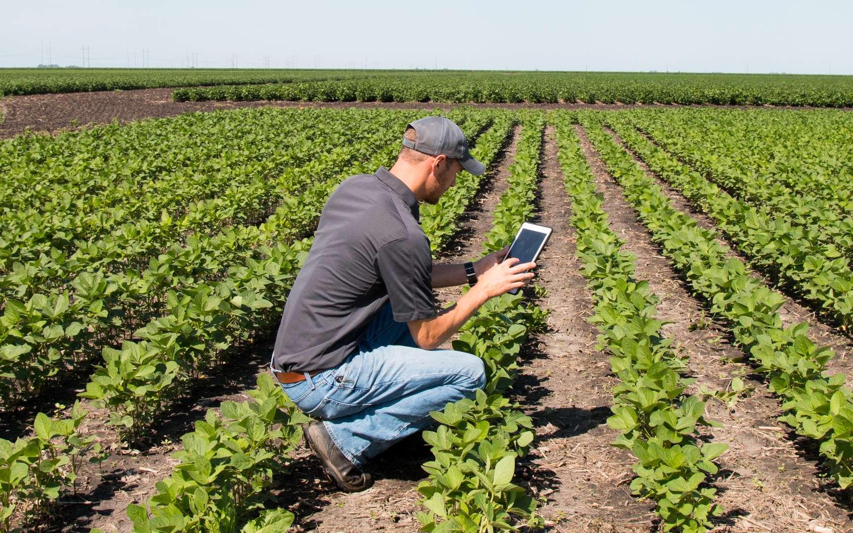 Sélection d'apps pour tablettes et smartphones utiles aux agriculteurs. © Nolan, fotolia