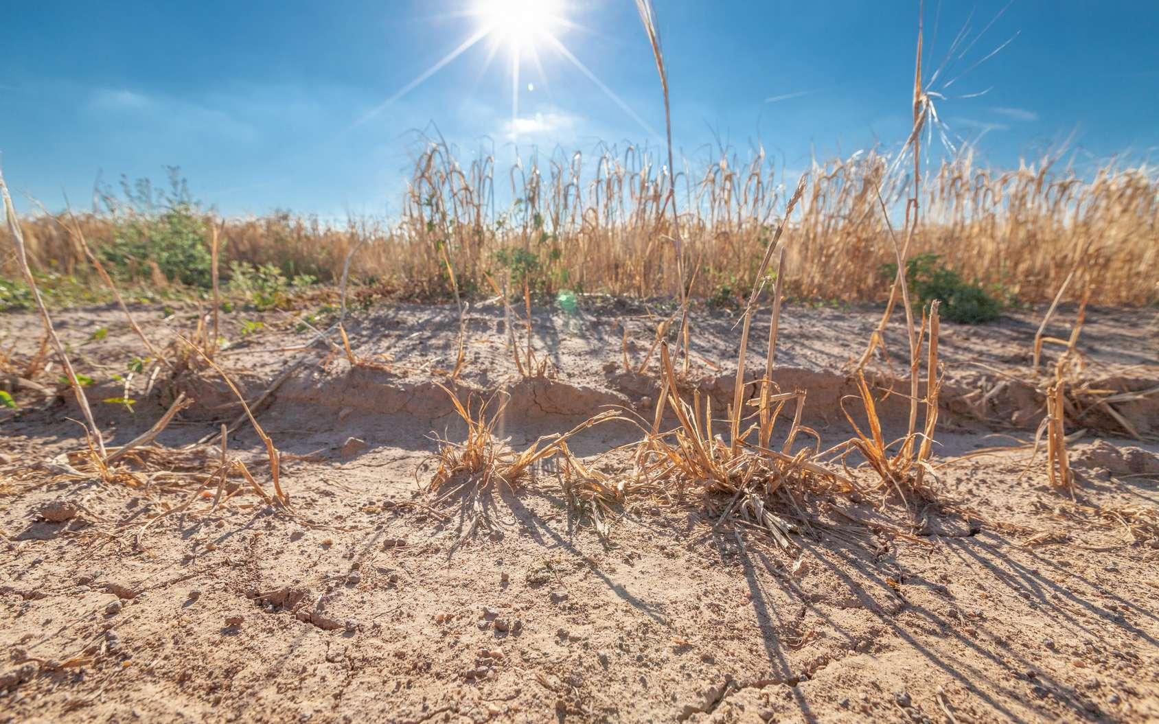 Les phénomènes de sécheresse deviennent de plus en plus récurrents dans une bonne partie de l'Europe. © Hykoe, Fotolia