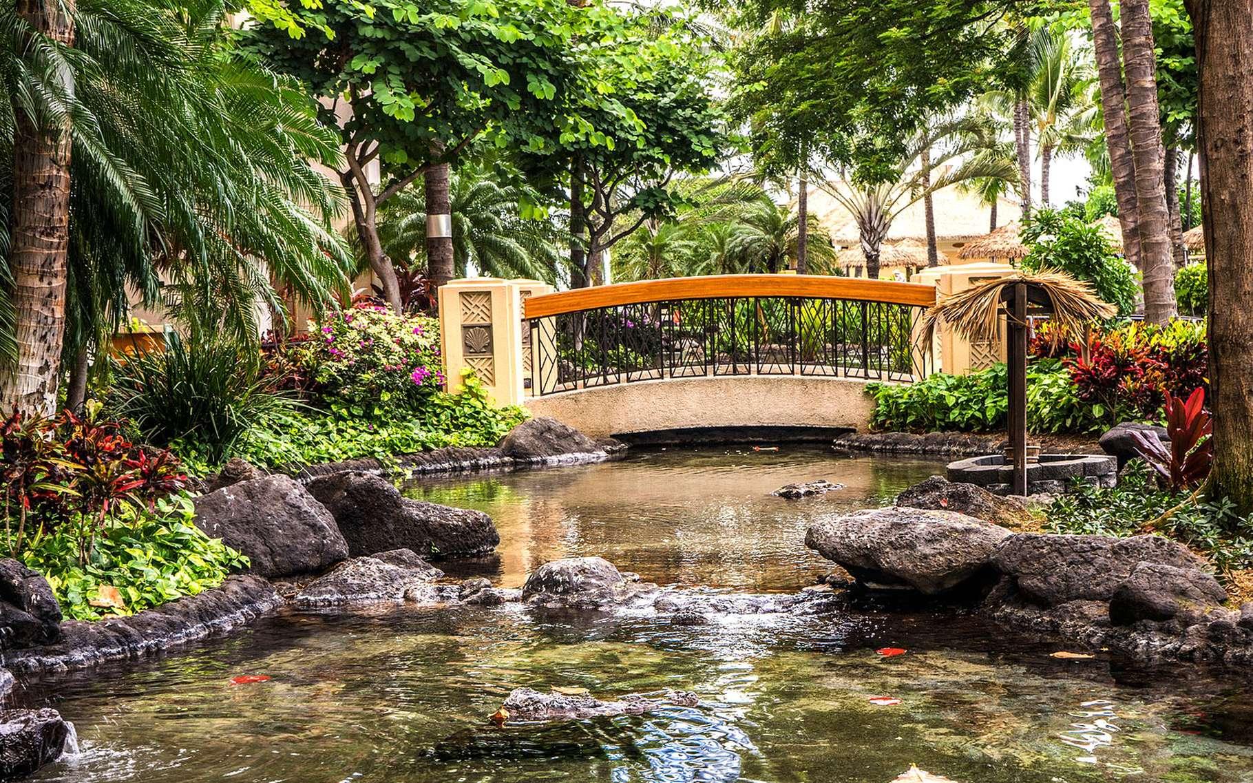 Construire Son Bassin De Jardin pompe et filtre de bassin de jardin, le matériel adapté