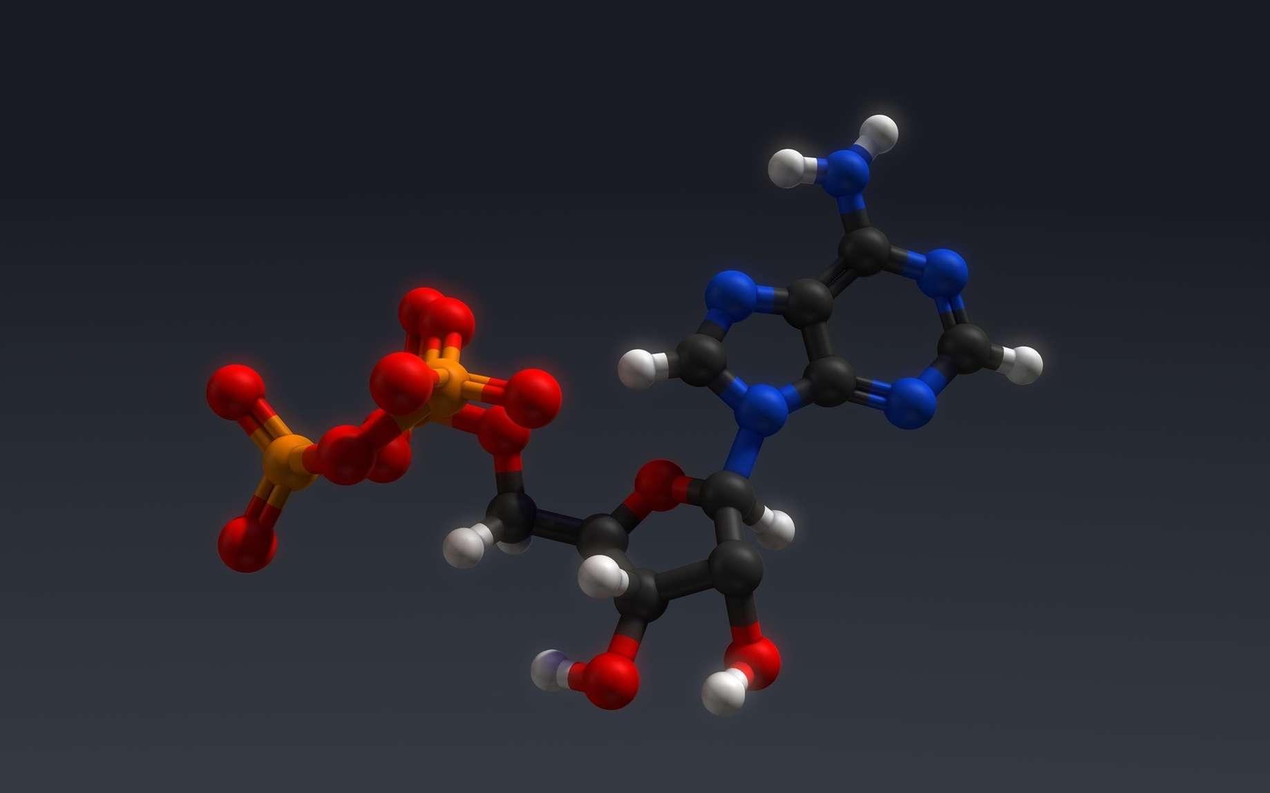 Structure de l'ATP ou adénosine triphosphate. © 7activestudio, Fotolia