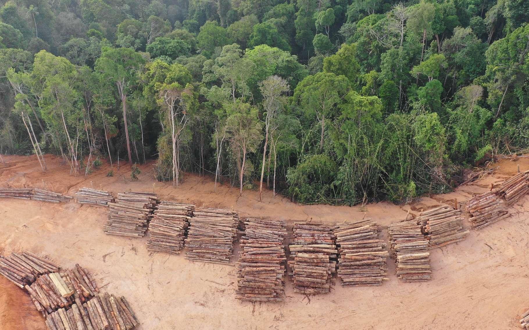 Les forêts vierges ont encore beaucoup reculé l'année dernière. En cause, la déforestation, mais aussi les incendies et d'autres évènements liés au changement climatique. © Richard Carey, Adobe Stock