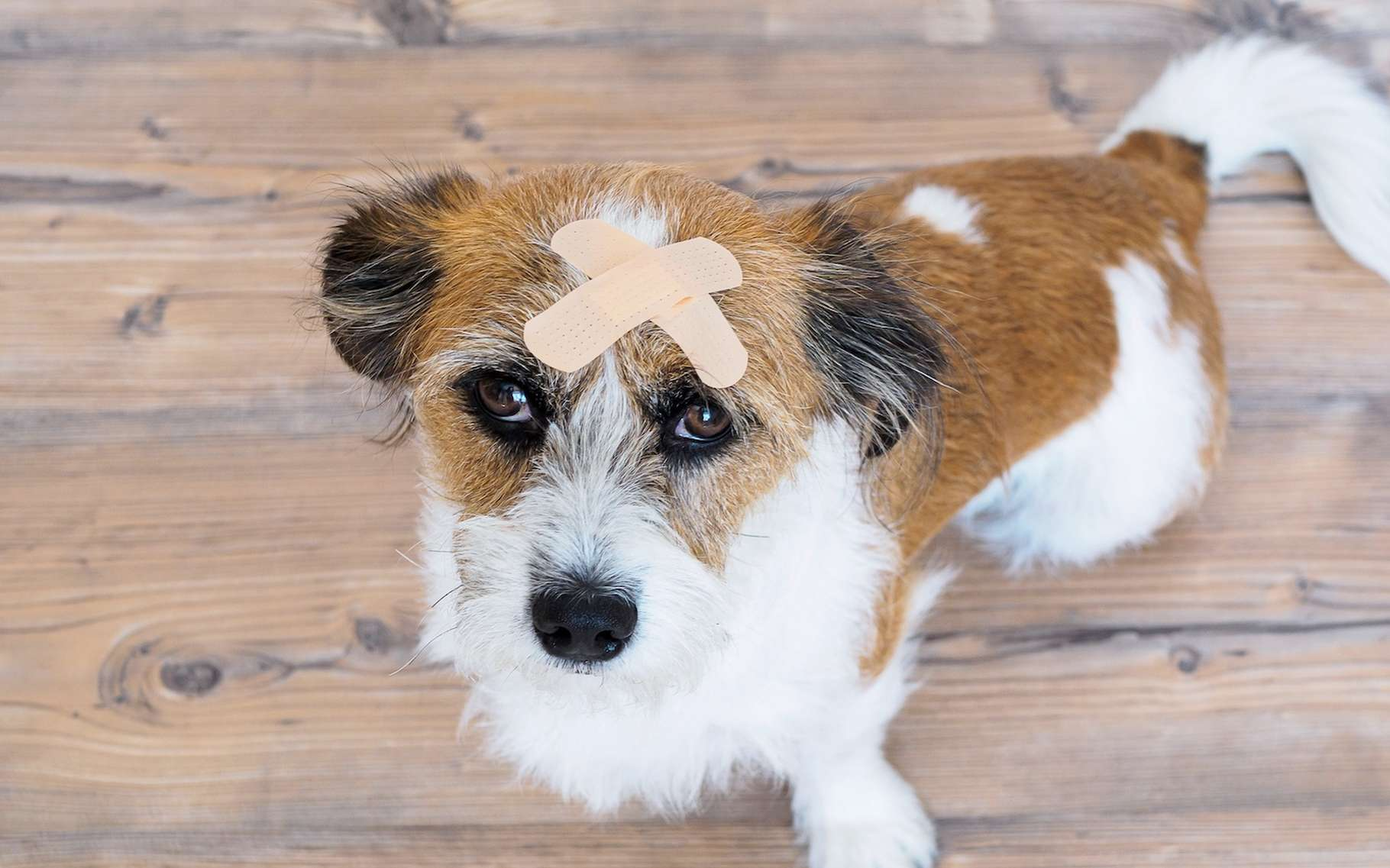 Si vous partagez votre vie avec un animal, chien ou chat, vous aurez peut-être envie d'apprendre quelques gestes de premiers secours animaliers. © Sonja, Adobe Stock