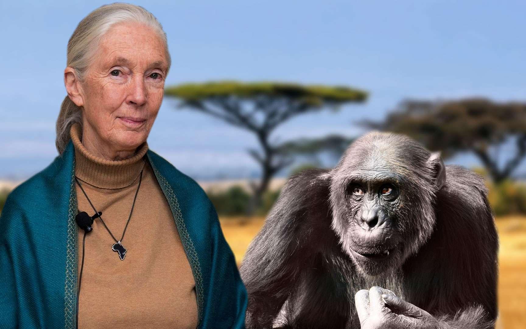 Barbara McClintock (1902-1992), américaine, est pionnière de la « cytogénétique », c'est-à-dire l'étude de la génétique au sein même de la cellule. Elle consacra sa carrière à l'étude des chromosomes de maïs, ce qui lui permit de découvrir les phénomènes de recombinaison au cours de la méiose, le lien entre les régions chromosomiques et les traits phénotypiques. La découverte de l'existence des transposons, ou « gènes sauteurs », lui valut le prix Nobel de médecine en 1983. © Jean-Pierre Rubinstein, Christiane Tuquet, Christiane Lichtlé, laboratoire Organismes photosynthétiques et environnement, ENS