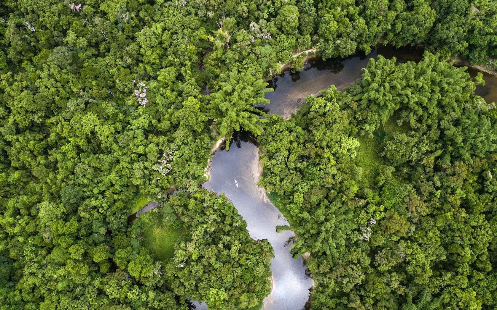 La forêt amazonienne compterait 107 tribus vivant sans contact avec notre civilisation. © Funai