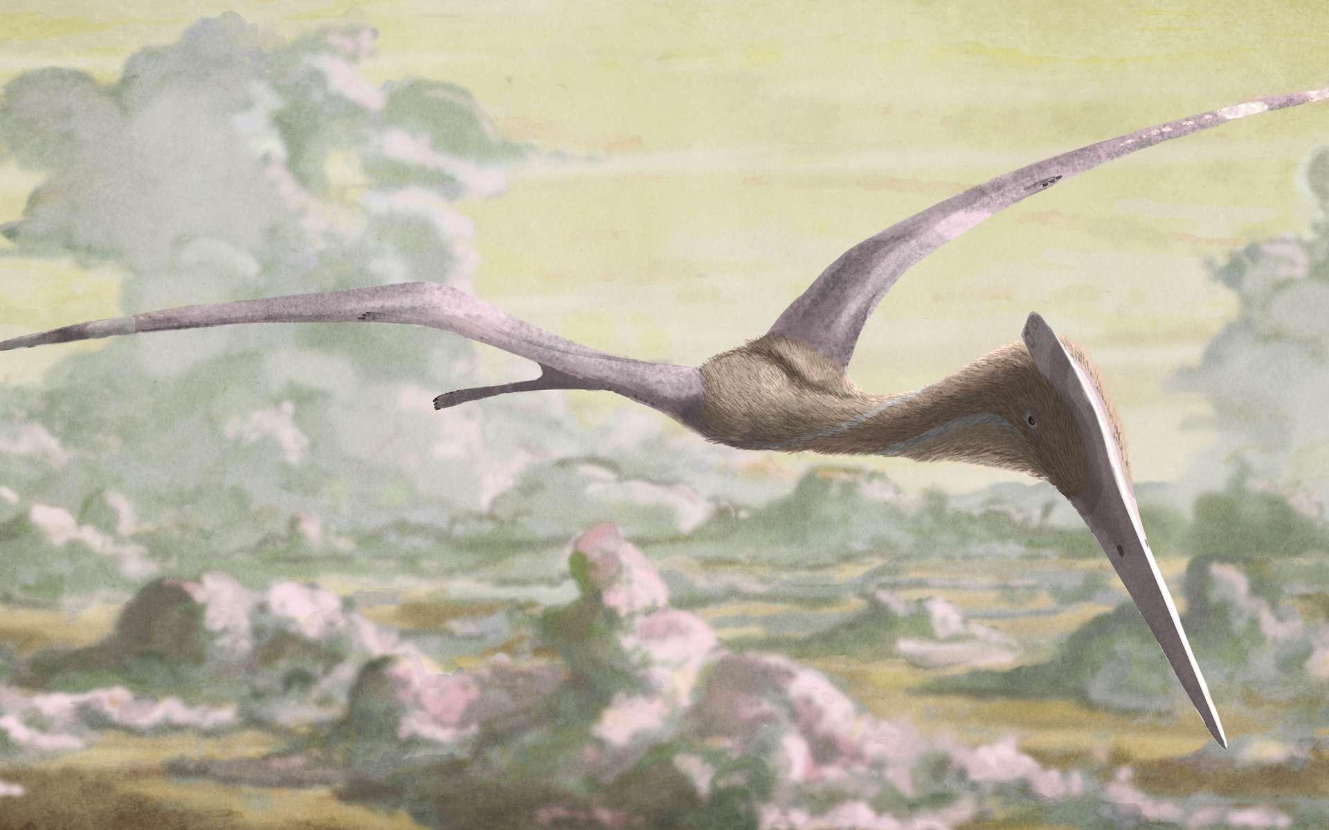 Les ptérosaures, bien que volants, faisaient figure d'animaux de belle taille même parmi les dinosaures. © DR