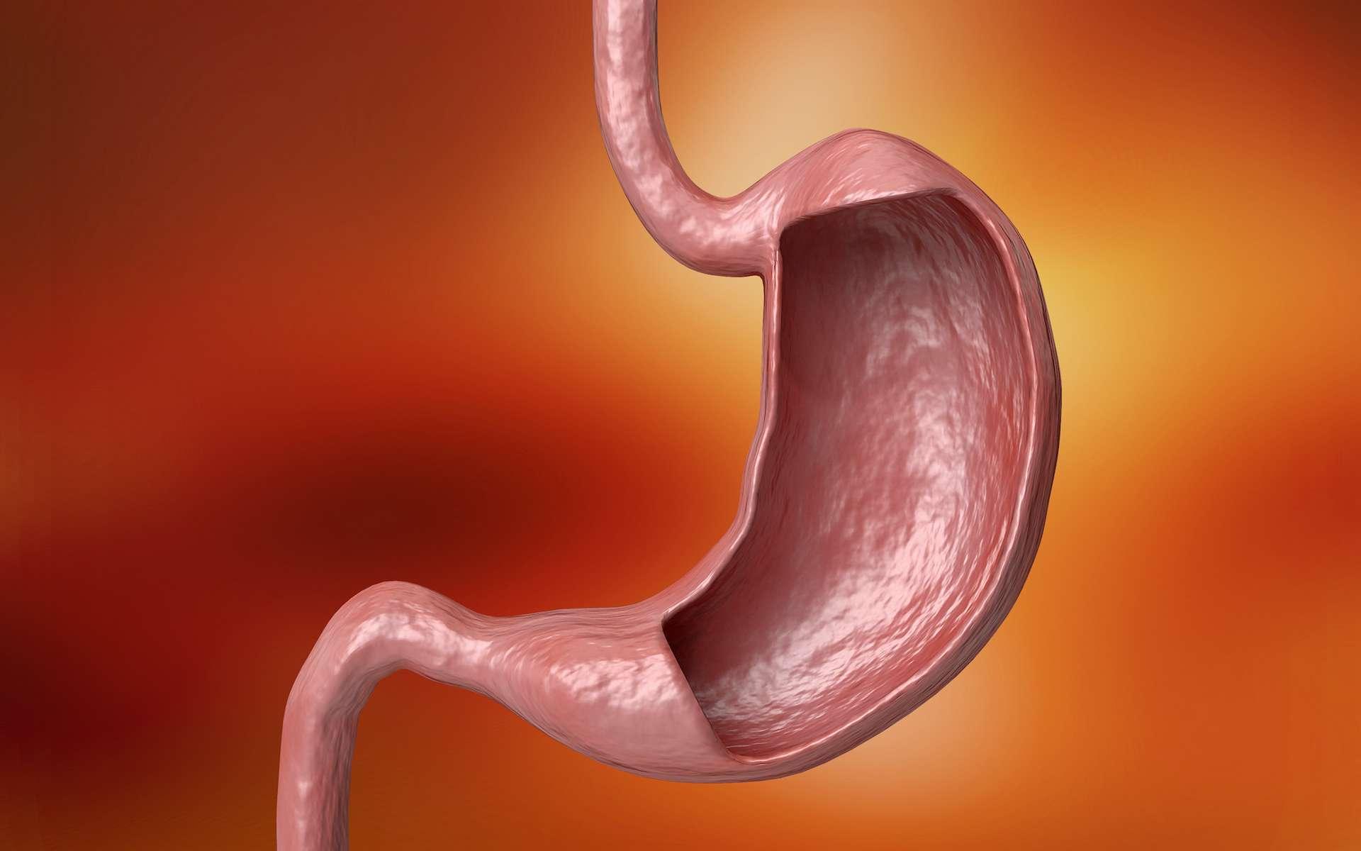 Le cancer de l'estomac est la principale indication de la gastrectomie. © AGPhotography, Adobe Stock