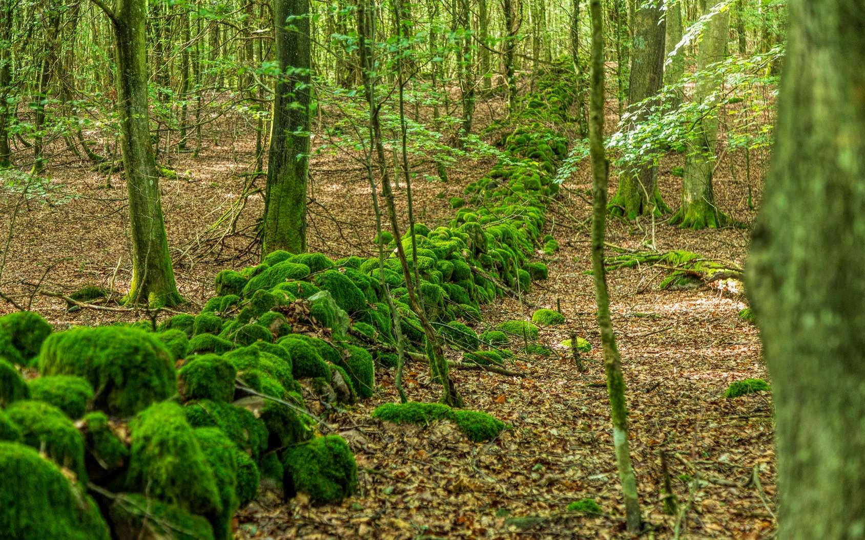 Promenade en forêt : attention aux tiques ! © Björn Kristersson, Fotolia