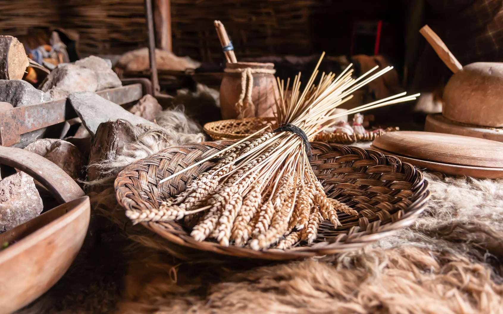 Au Néolithique, les humains ont appris des techniques pour transformer la nourriture, par exemple en la broyant, en la cuisant… © Stephen, fotolia