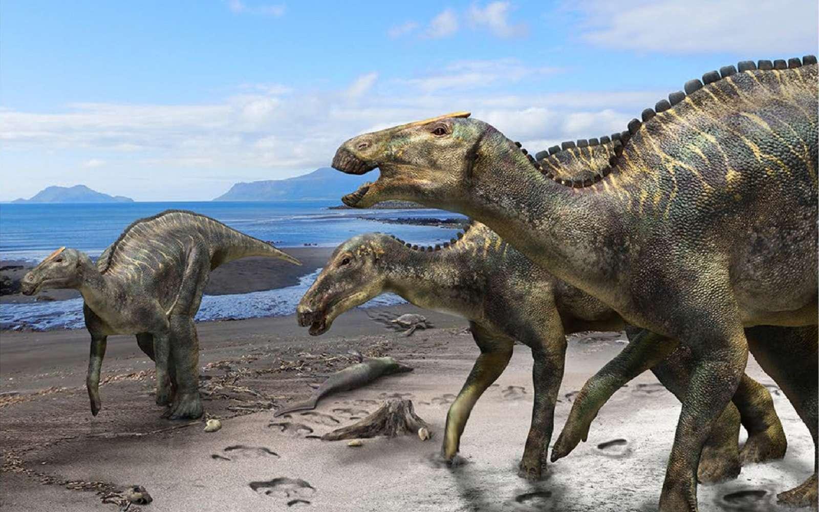 Reconstitution de Kamuysaurus japonicus. © Kobayashi Y. et coll., Scientific Reports 2019