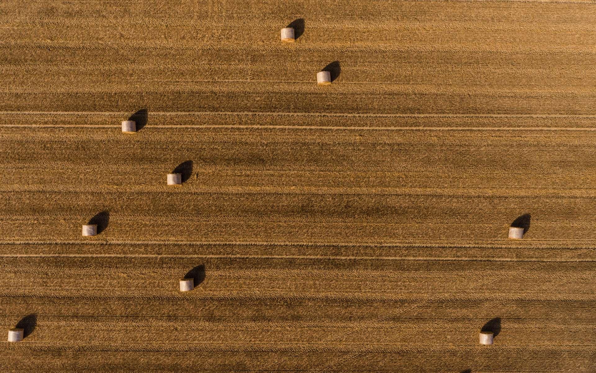 L'impact du réchauffement sur les dates des récoltes. © Jean Wimmerlin, Unsplash