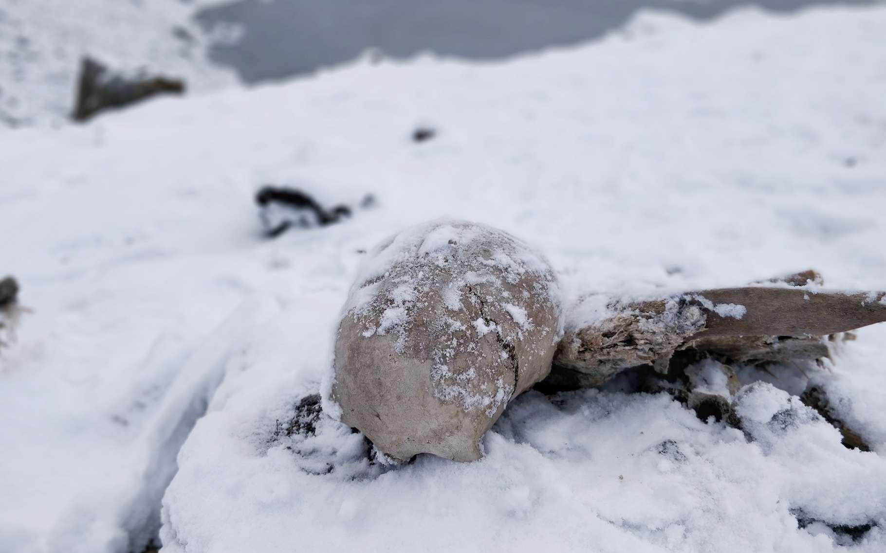De nombreux squelettes jonchent les alentours du lac de Roopkund, dans l'Himalaya. Les causes de leur mort reste un mystère pour les chercheurs. © Anuroop, Adobe Stock