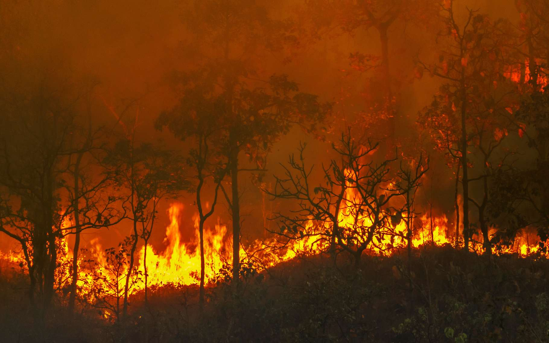 De méga-incendies ravagent la planète. La Nasa suit les fumées qu'ils provoquent grâce à ses satellites. © toa555, Adobe Stock