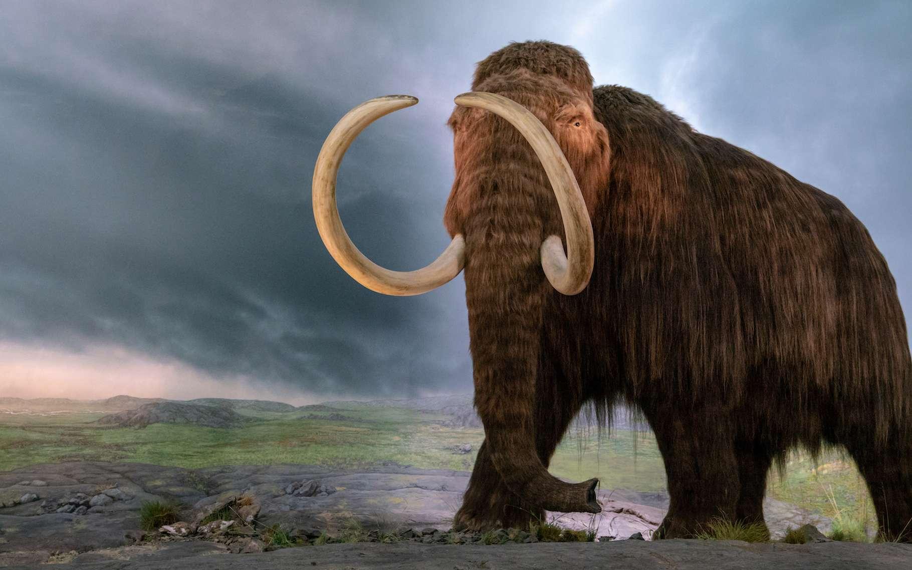 Reverra-t-on bientôt des mammouths laineux du côté de l'Arctique ? C'est en tout cas ce que promet une start-up américaine. © Jayce, Adobe Stock