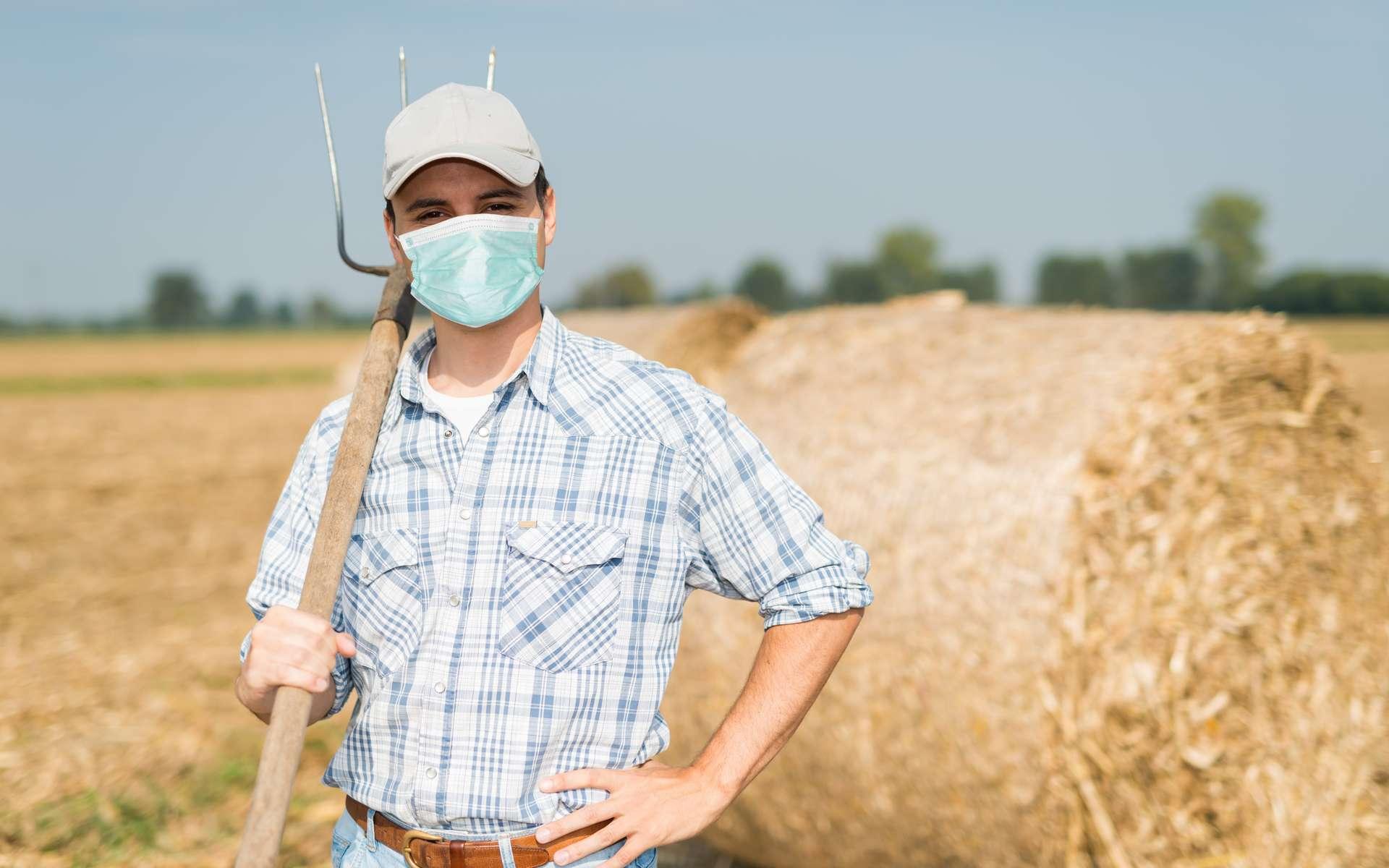 La pandémie de coronavirus a mis à mal le secteur de l'agriculture et du maraîchage. © Minerva Studio, Adobe Stock.