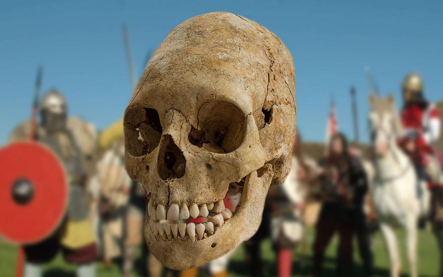 Dent de mammouth du Paléolithique. Des fouilles menées sur le site d'Havrincourt, dans le Pas-de-Calais, ont mis au jour des traces de peuplement par l'Homme remontant à 50.000 et 30.000 ans, soit du Paléolithique moyen et supérieur, comme en témoigne la découverte de lames en silex. La disposition d'artefacts de ce genre permet aux archéologues d'étudier l'organisation territoriale des groupes humains ayant fréquenté le site (degré de planification et répartition spatiale des activités, récurrence d'occupation...). Les restes d'animaux permettent quant à eux de caractériser la faune qui vivait sur place à l'époque, et donc le type de milieu. Havrincourt hébergeait entre autres des restes de mammouth (dont l'extraction d'une dent est présentée sur la photographie), de bison, de rhinocéros laineux et de cheval. Ces espèces vivaient plus que probablement dans une steppe. © Denis Gliksman, Inrap