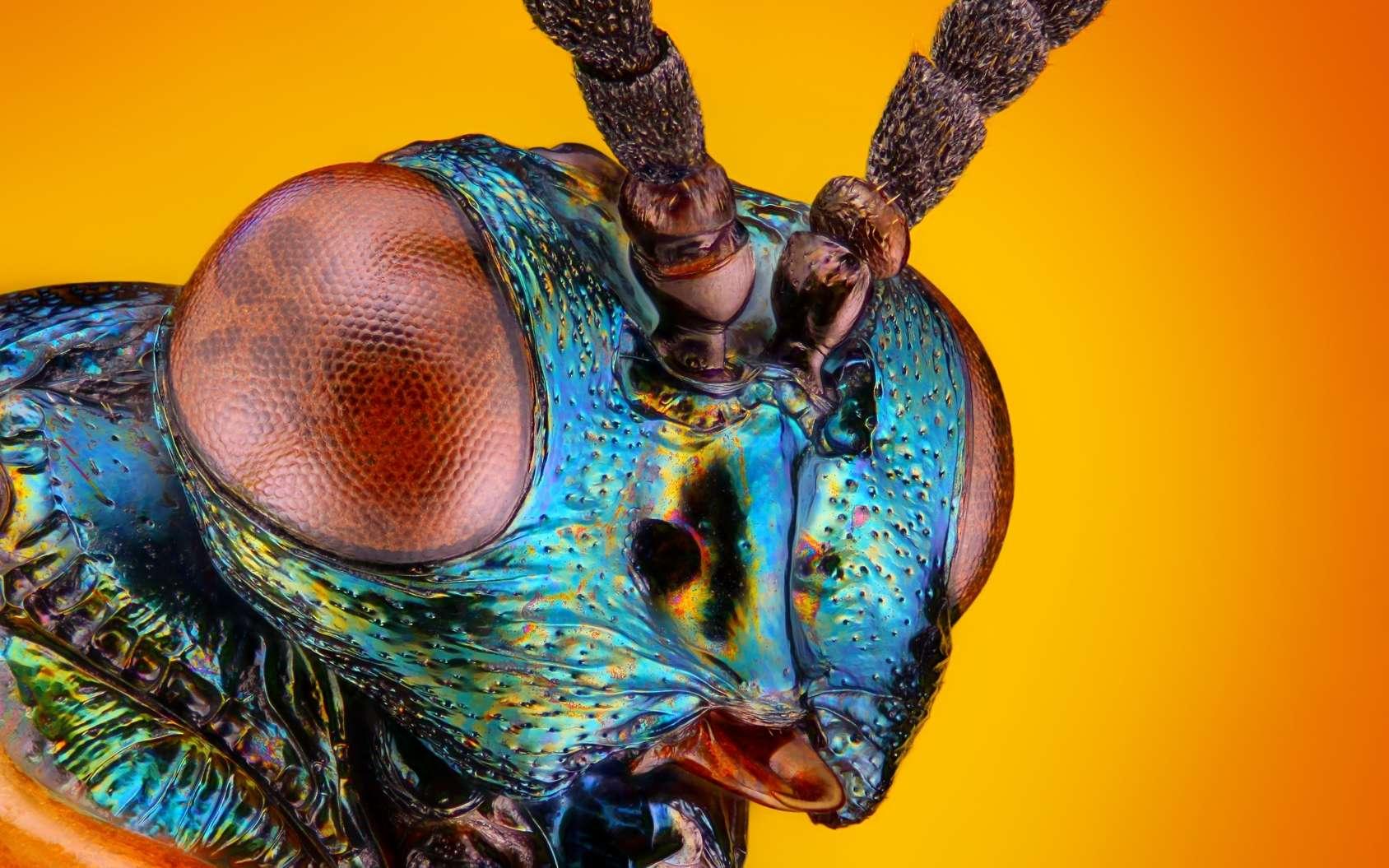 Le programme MicroBrain de la Darpa espère faire émerger de nouveaux systèmes de traitements pour l'intelligence artificielle plus rapides et moins énergivores en s'inspirant des insectes. © tomatito26, Fotolia