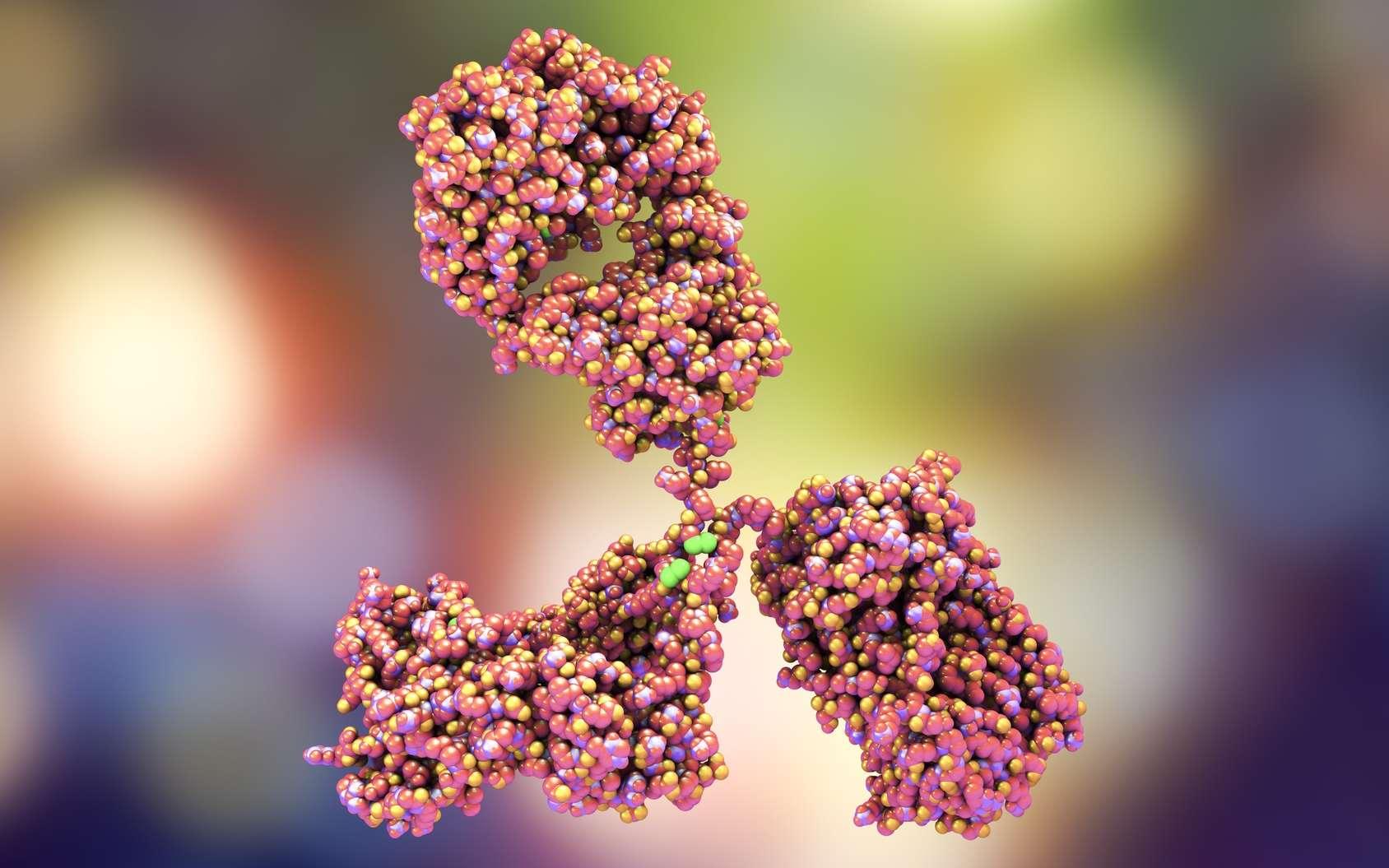 Les anticorps participent à l'immunité acquise par l'organisme. © Kateryna_Kon, Fotolia
