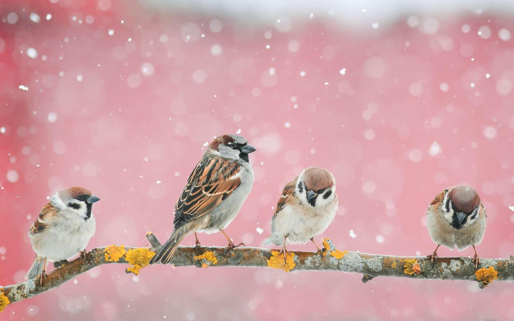 Au cours des 80 derniers millions d'années, les chercheurs ont constaté que la masse corporelle des oiseaux et des mammifères évoluait plus rapidement à chaque fois que le climat se refroidissait. © nataba, Fotolia