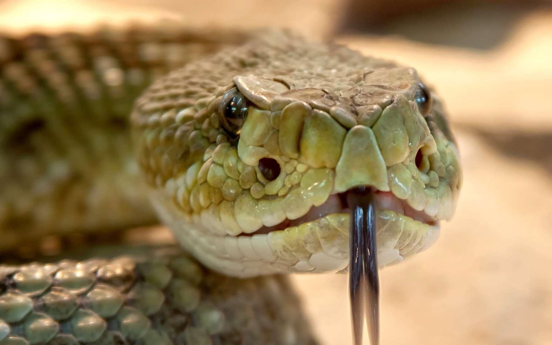 L'herpétologie se consacre à l'étude des reptiles et des amphibiens. © Foto-Rabe, Pixabay, CC0 Creative Commons