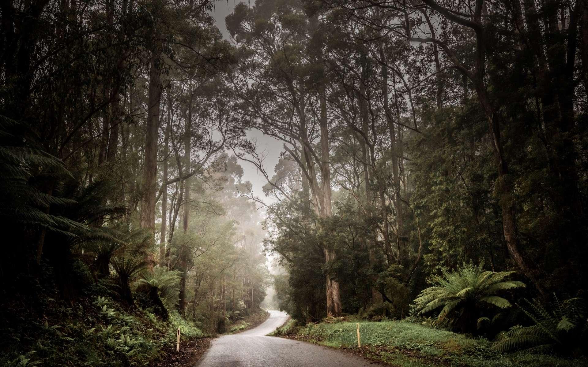 Les incendies en Australie ont détruit 20 % des forêts sur le continent. Photo d'un paysage de Cradle Mountain dans la région de Tarkine sur l'île de Tasmanie. © Thomas Jastram, Adobe Stock