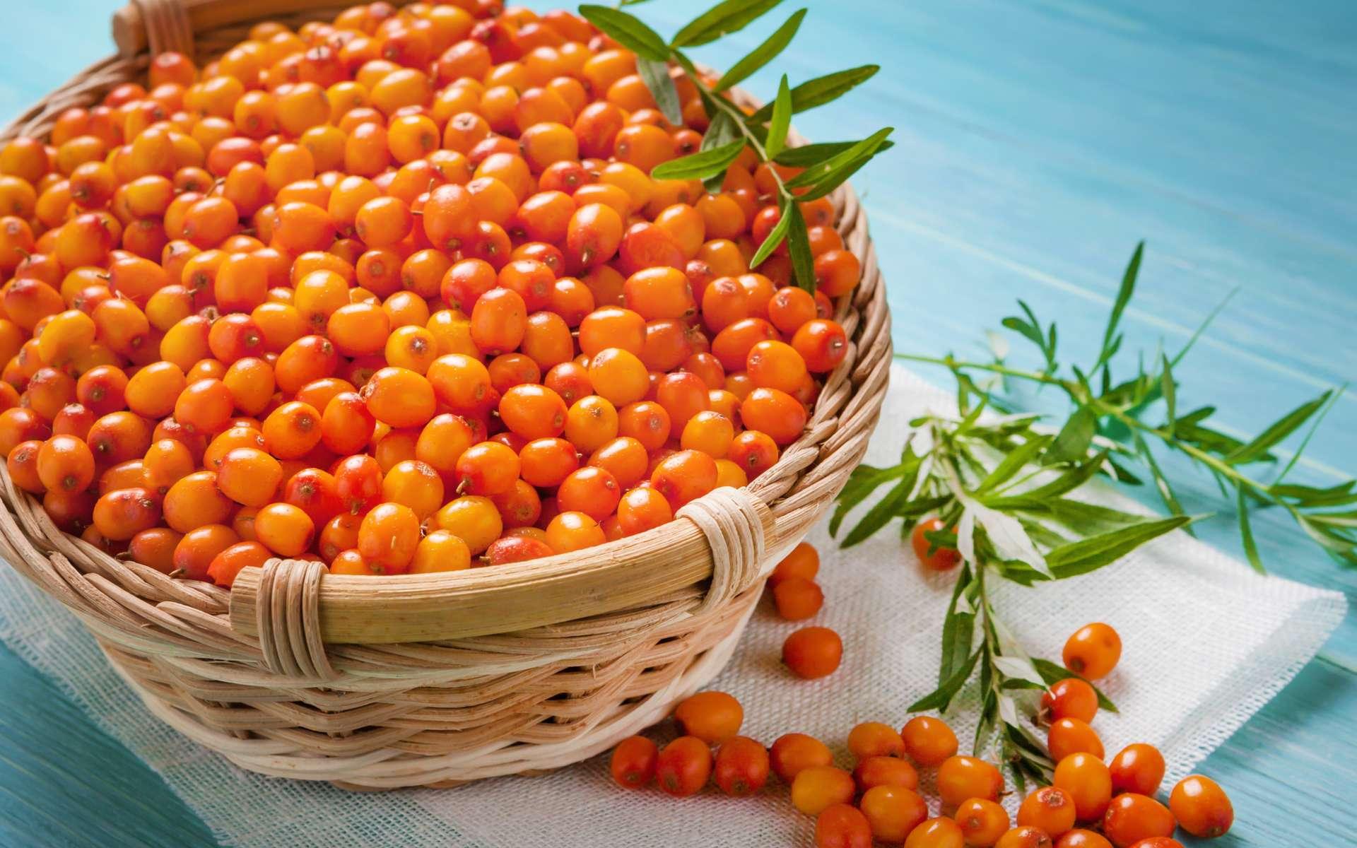 Les fruits de l'argousier, arbuste épineux aux baies orange-rouge (à ne pas confondre avec l'arbousier), sont riches en oméga 7. © Luca9257, Adobe Stock