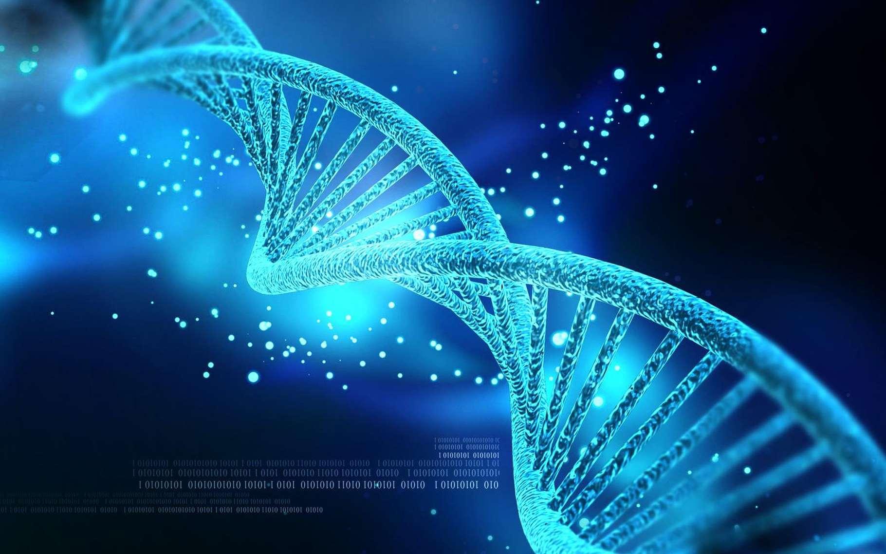Un allèle est une version d'un gène (lui même étant un fragment déterminé d'une séquence d'ADN). Si un allèle est neutre, il ne confère ni avantage ni inconvénient du point de vue de la sélection naturelle. © Creations, Shutterstock