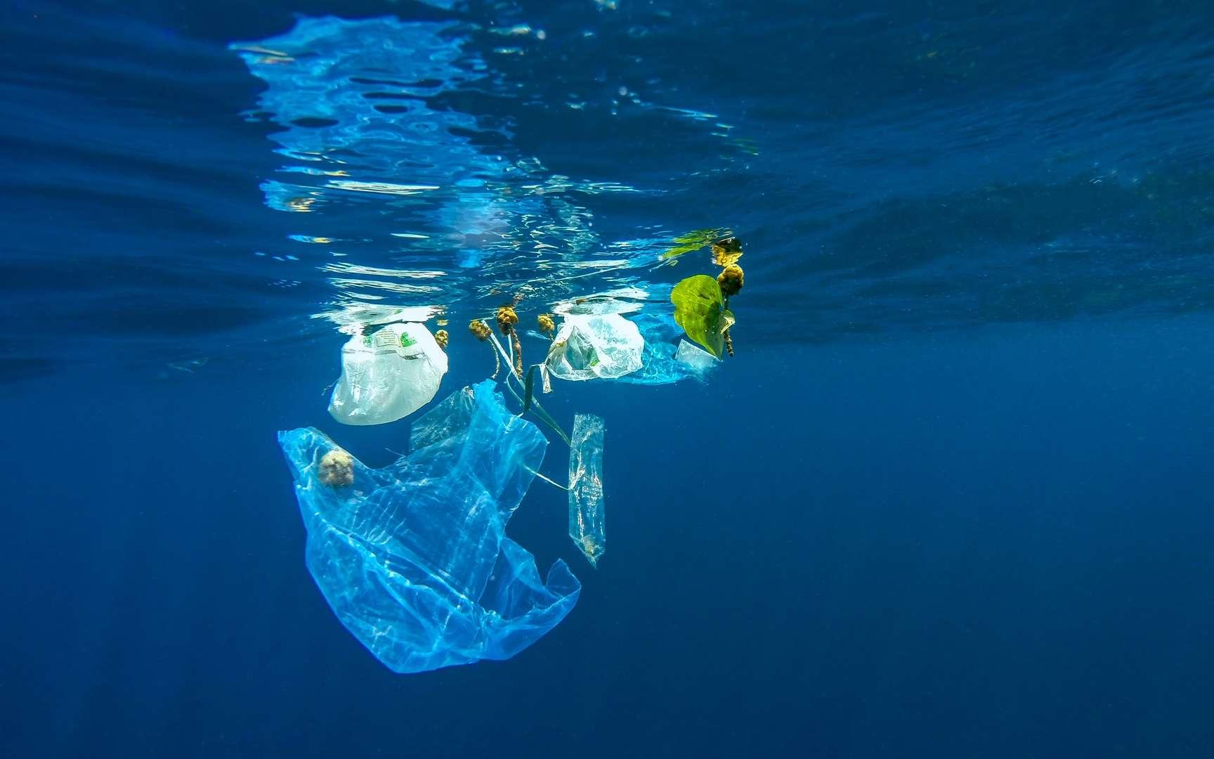 La pollution de l'océan Pacifique par les matières plastiques est inquiétante. © aryfahmed, Fotolia