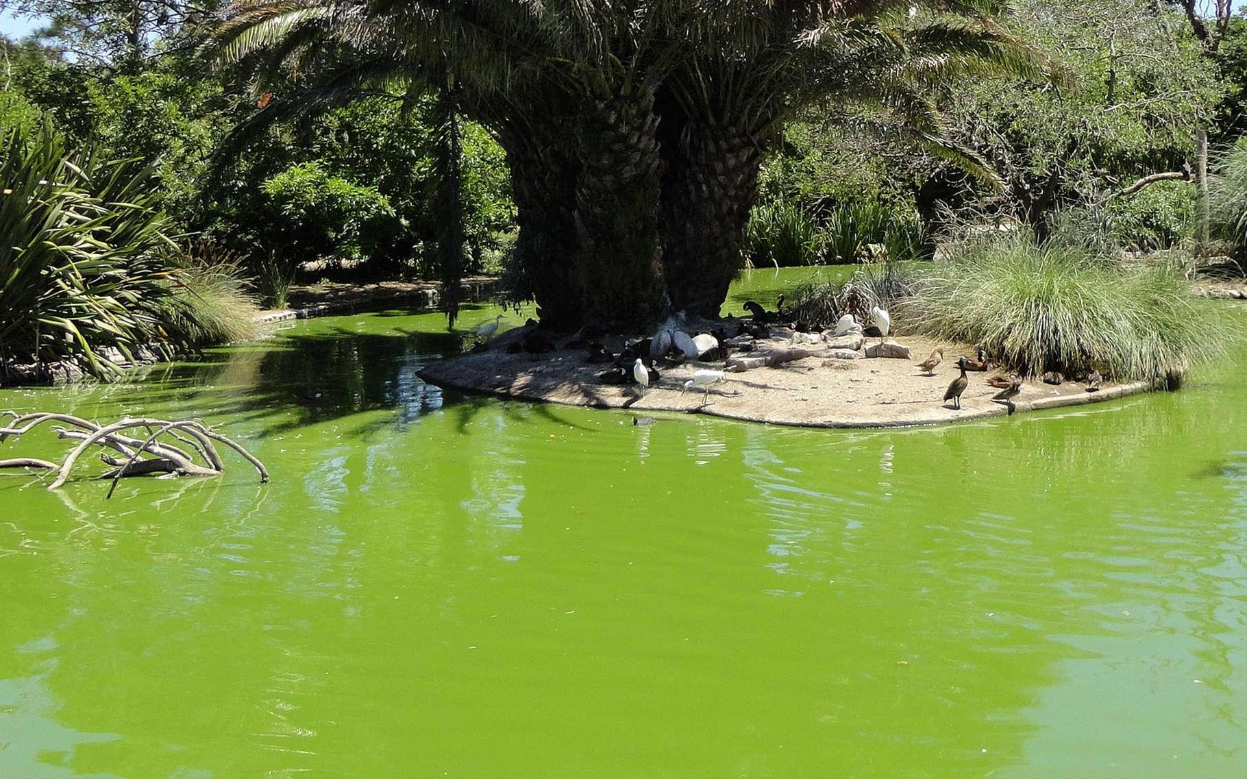 Bassin Préformé Hors Sol bassin de jardin : quelles dimensions ? | dossier