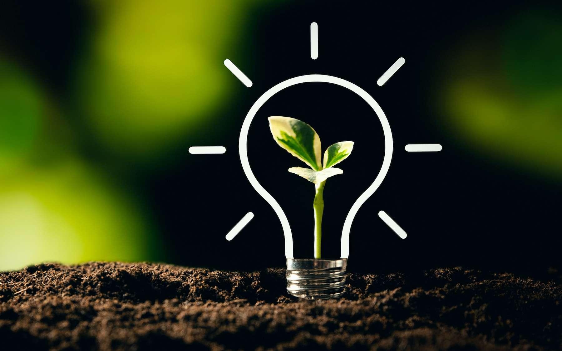 Les solutions concrètes des start-up pour la transition écologique. © Proxima Studio, Adobe Stock