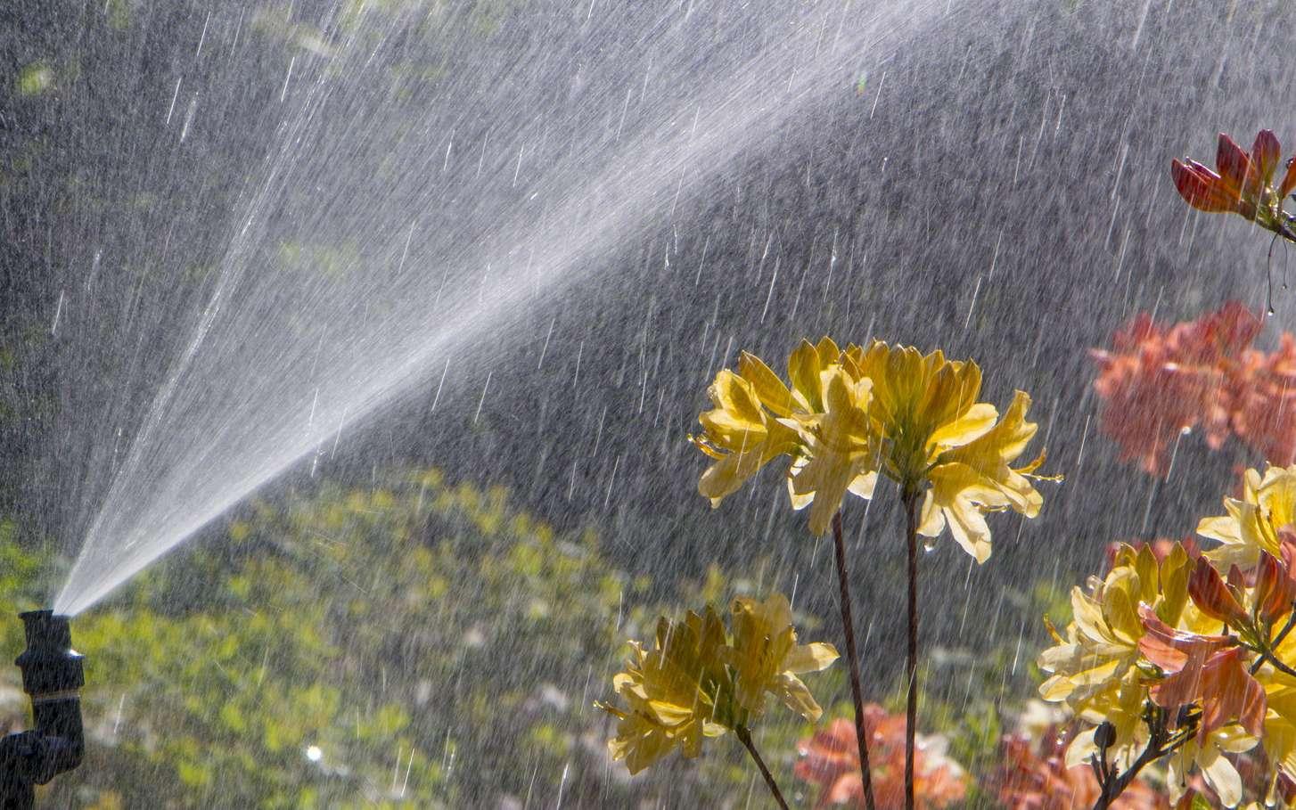 Arroser son jardin le matin ou le soir réduit de 5 % à 10 % les pertes en eau. © maykal, Fotolia