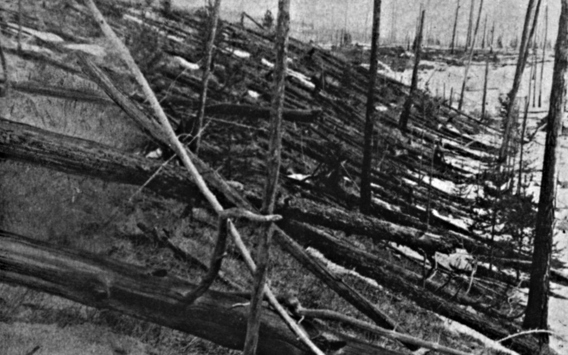 Cette photographie a été prise en 1929 sur le site de l'événement de la Toungouska, en Sibérie. La déflagration de l'explosion a été entendue dans un rayon de 1.500 km. © Yevgeny Krinov, Wikimedia Commons, DP