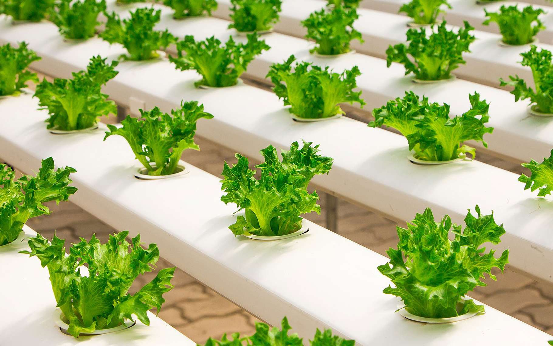 Un semis de salades. © Naidokdin, Pixabay