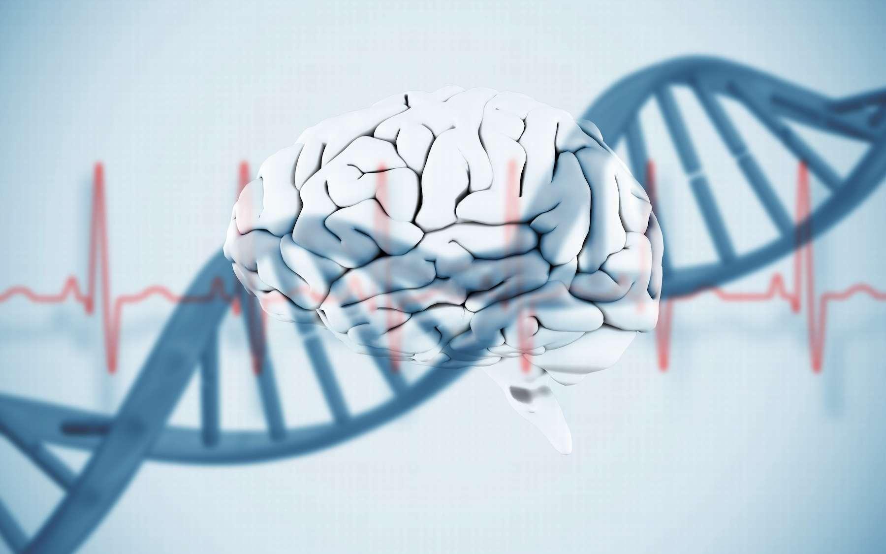 Le cerveau ne s'arrête pas immédiatement après la mort. © WavebreakMediaMicro, Adobe Stock