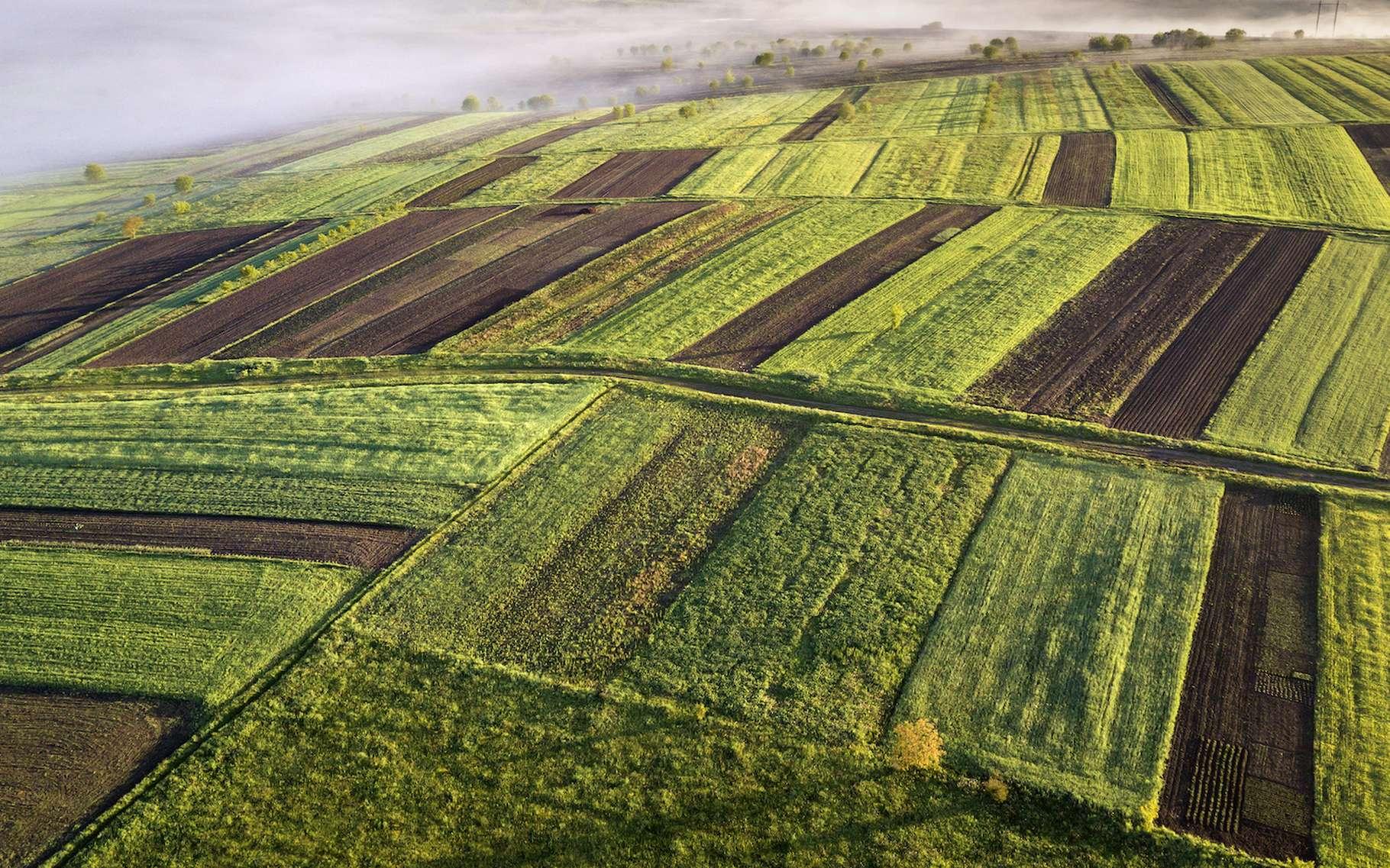 Urbanisation et agriculture intensive augmentent le risque de pandémies