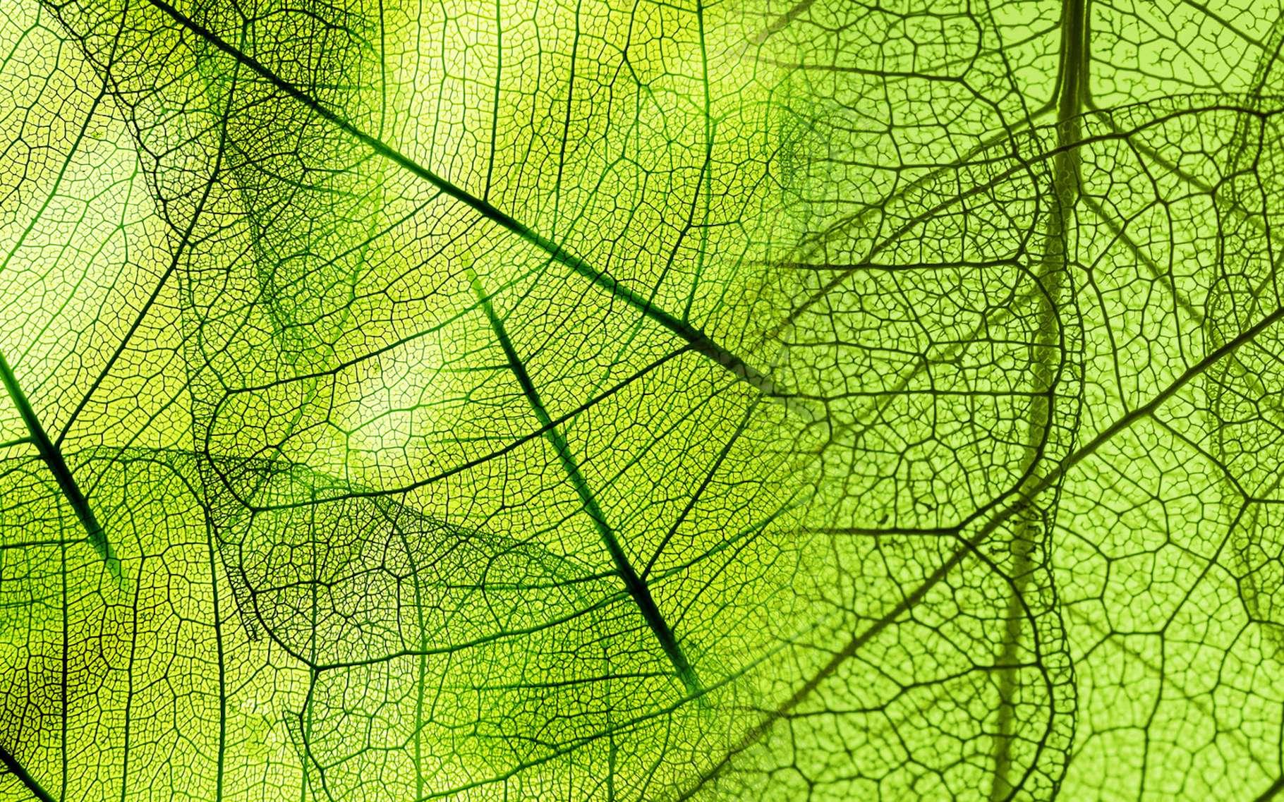 Des chercheurs sont sur une sérieuse piste qui permettrait d'élaborer un matériau capable de réguler lui-même sa température en fonction des conditions extérieures. Ils se sont inspirés de la nature. © Vera Kuttelvaserova, Fotolia