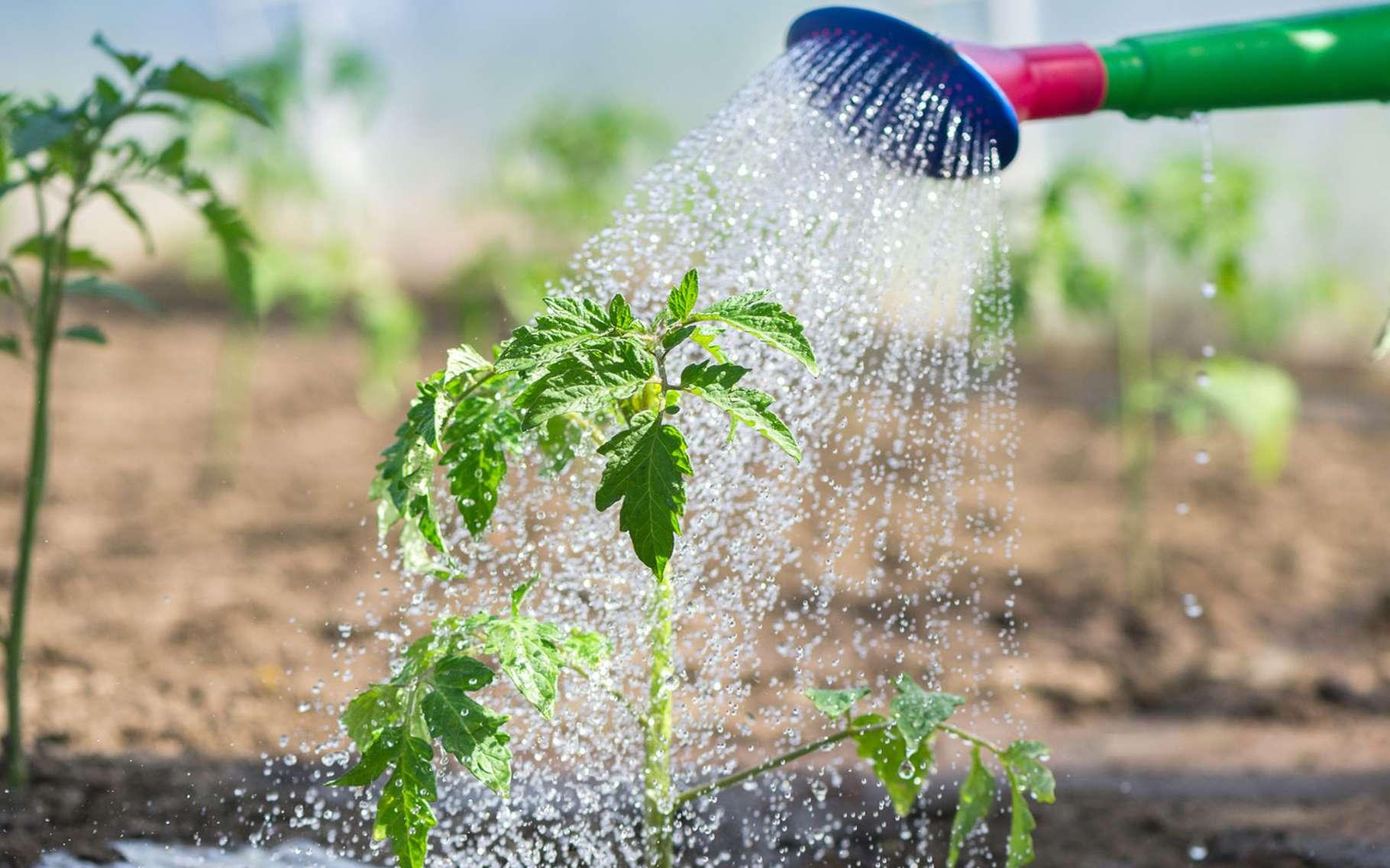 Comment Arroser Jardin Pendant Vacances les arrosages réguliers sont importants | dossier