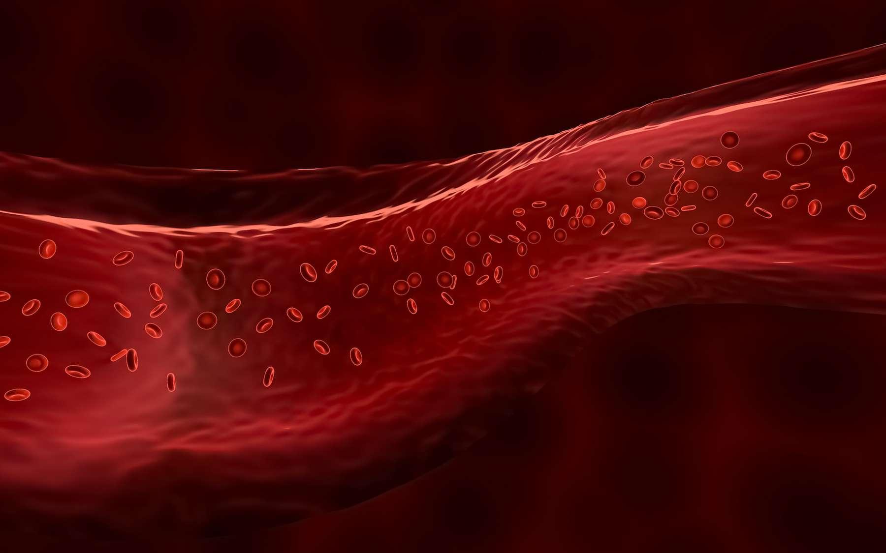 L'hémoglobine est la protéine des globules rouges transporte l'oxygène dans le sang. © Matthieu, Adobe Stock