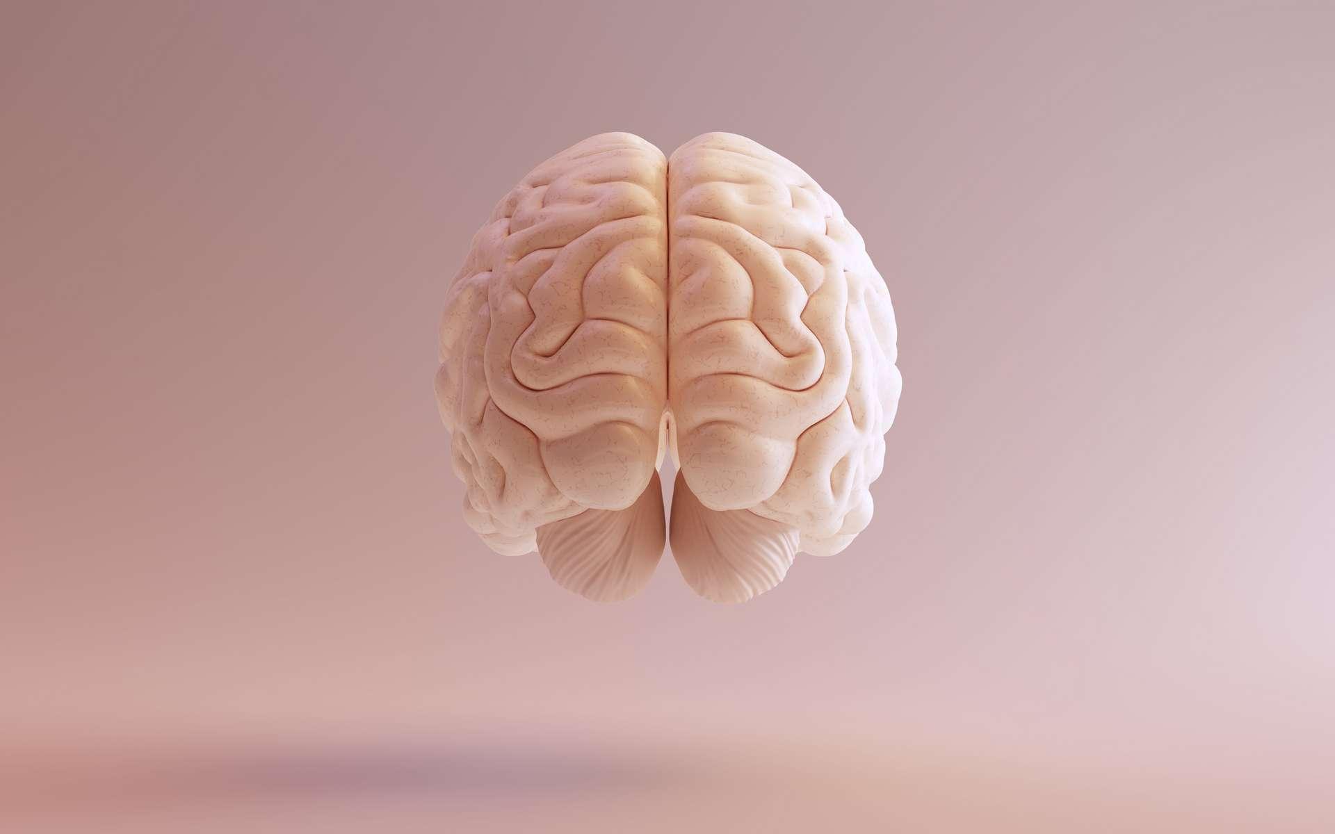 Qu'est-ce que le syndrome du savant acquis ? © Paul, Adobe Stock