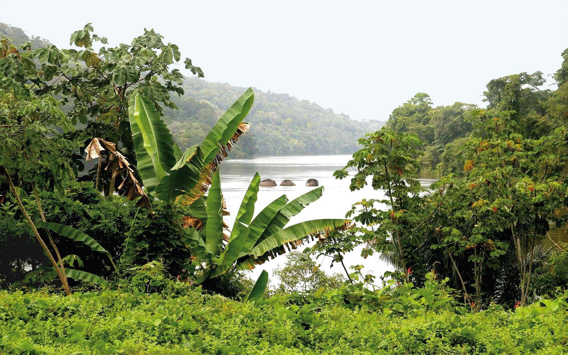 Avec une capacité de stockage de 140 MWh, la Centrale électrique de l'Ouest guyanais (CEOG) sera la plus grande du monde. © HDF Energy