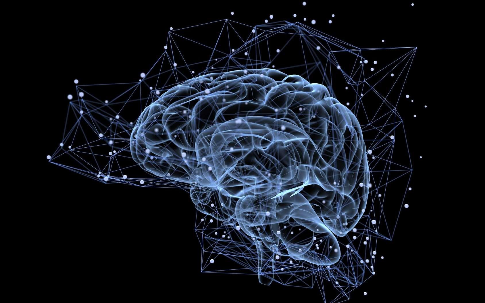On trouve des neurones immatures dans le cerveau jusqu'à la fin de la vie. © Tatiana Shepeleva, Fotolia