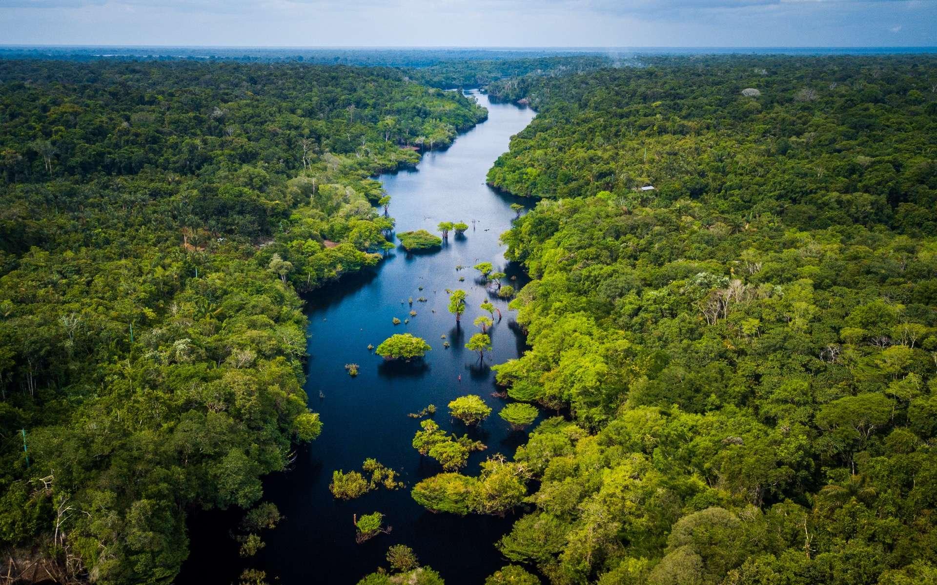 En l'espace de 18 ans, la forêt amazonienne a perdu une surface équivalente à celle de l'Espagne. © Marcio Isensee e Sá, Adobe Stock