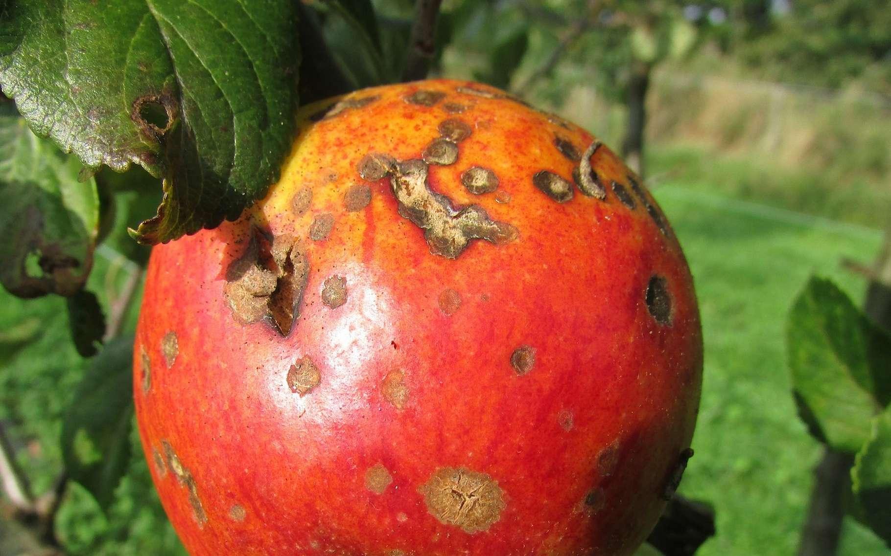 Les fongicides sont des agents qui permettent de lutter contre les attaques de champignons en tout genre. © Kasman, Pixabay License