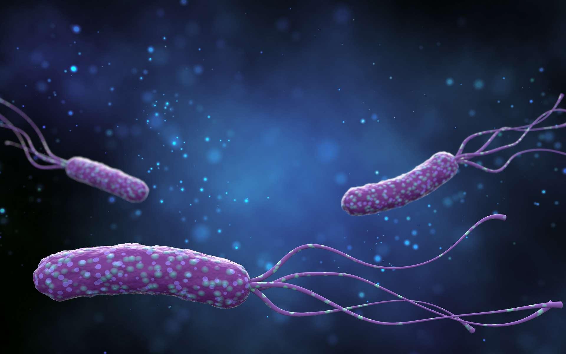 Helicobacter pylori : une bactérie pouvant vivre dans un environnement acide. © k_e_n, Adobe stock